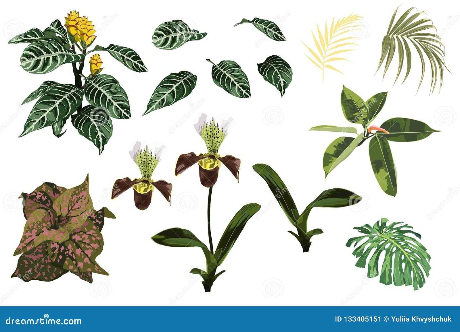 Flores tropicales de la orquídea de la selva, planta amarilla exótica, hojas de palma tropicales y sistema de la planta