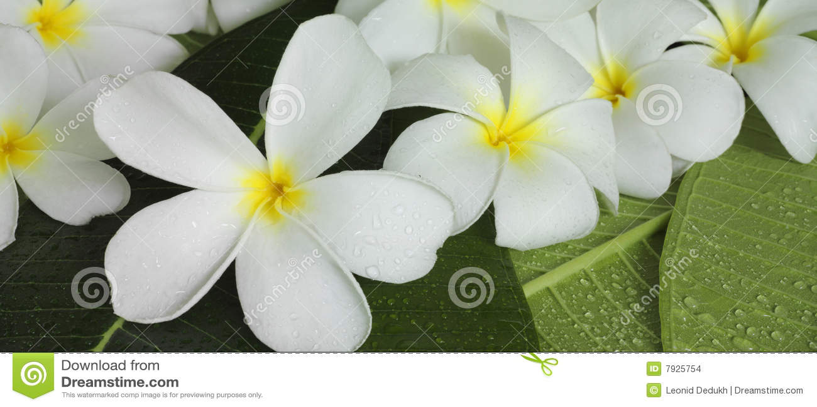 flores tropicales exoticas images. Black Bedroom Furniture Sets. Home Design Ideas