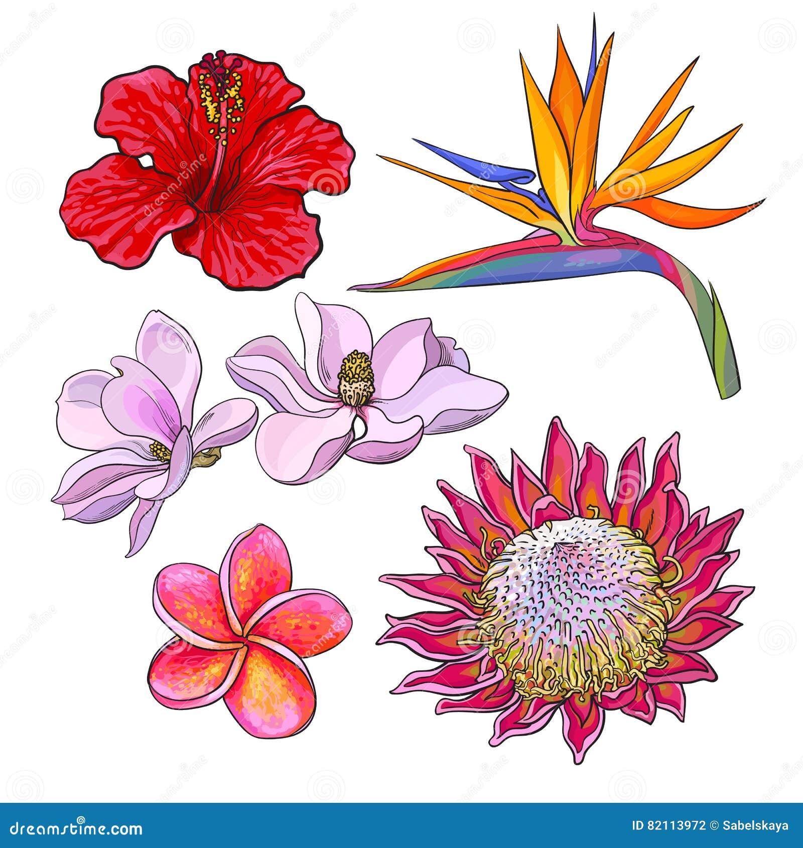 Flores Tropicales Hibisco Protea Plumeria Ave Del Paraiso