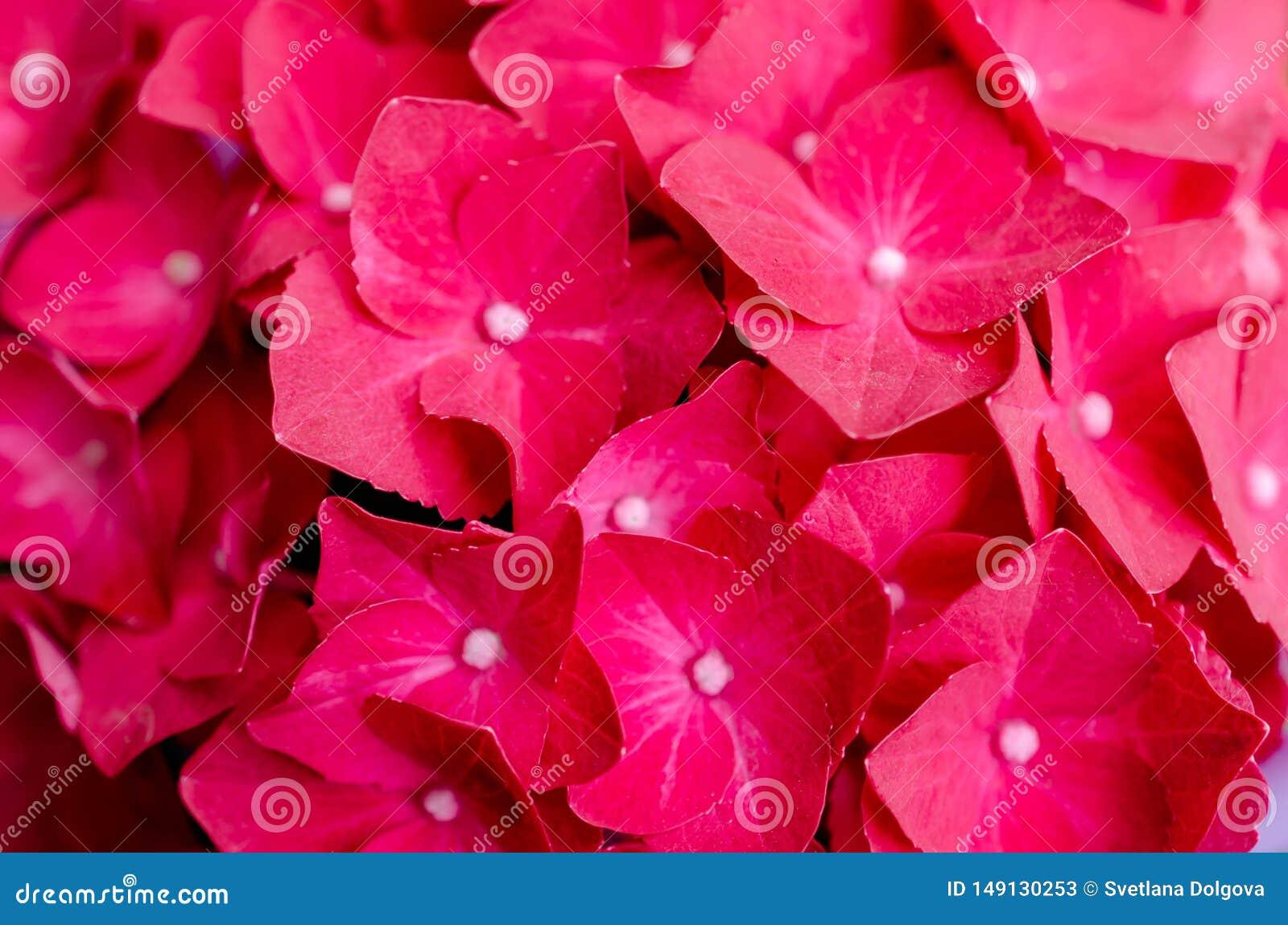 Flores vermelhas bonitas, fundo floral