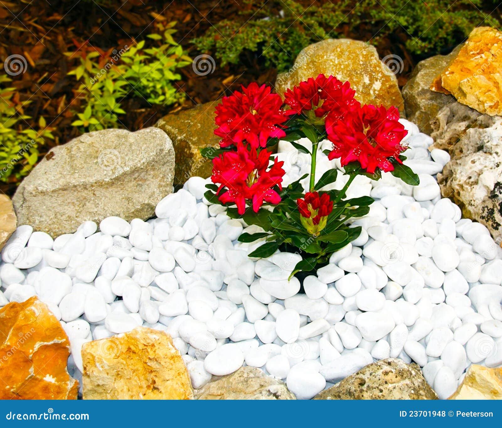 jardim rosas vermelhas:Flores Vermelhas Em Um Jardim Ornamental Fotos de Stock Royalty Free