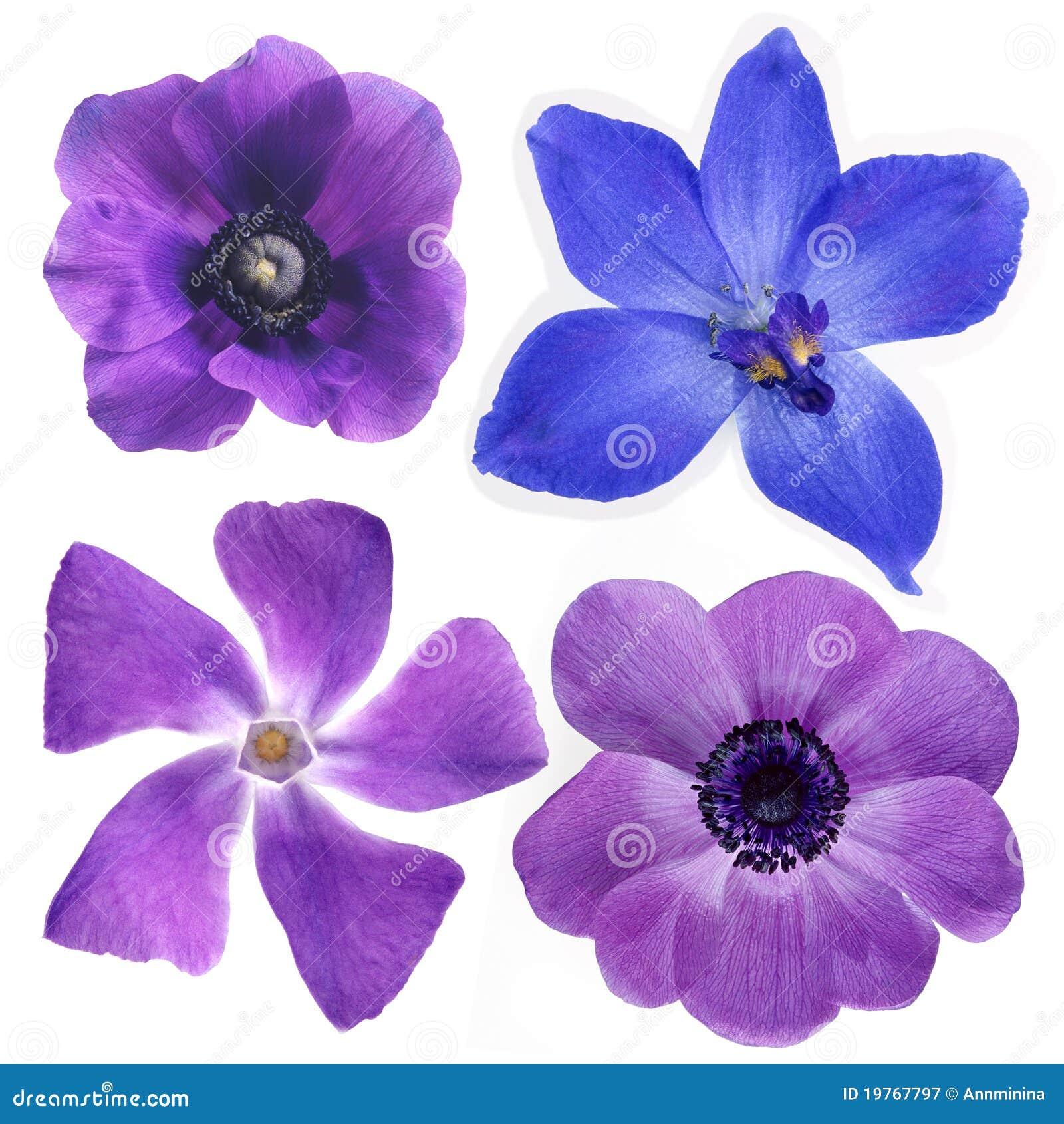 Flores Violetas Fotografia de Stock Royalty Free - Imagem
