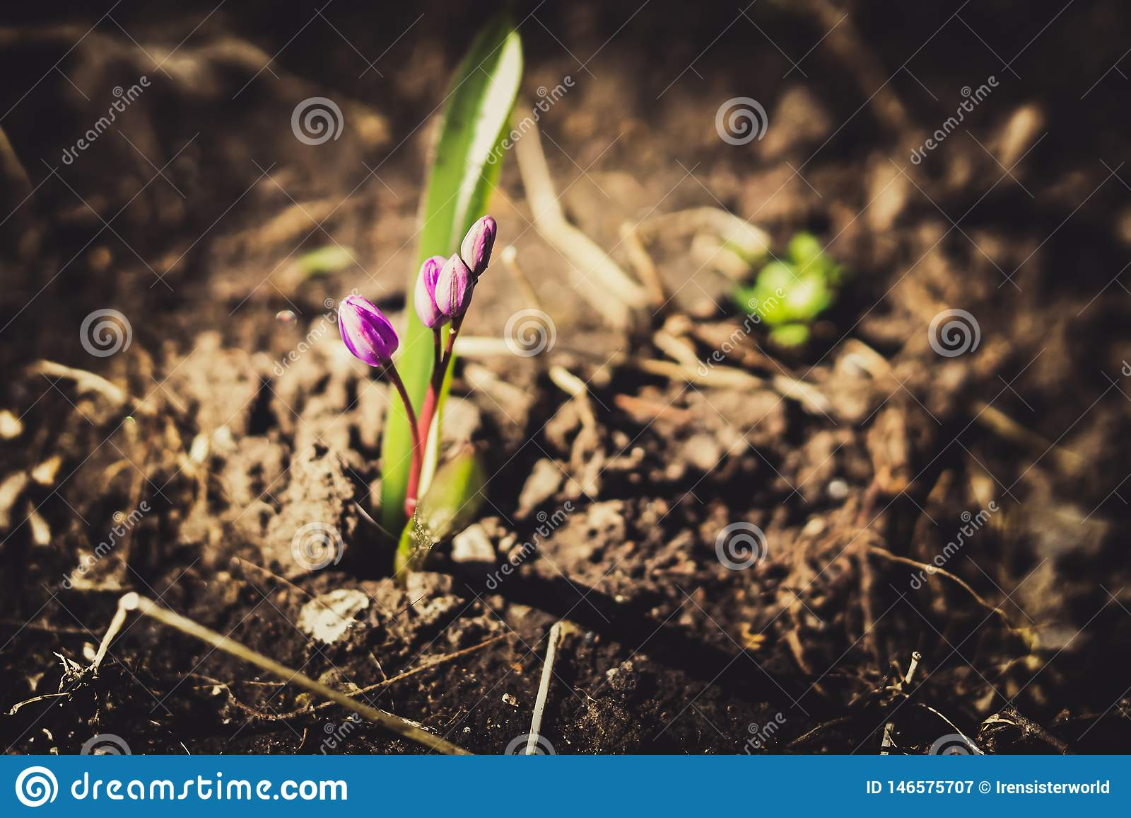 Flores violetas na terra