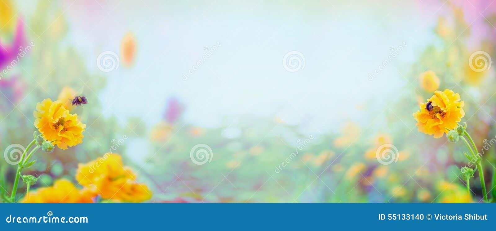Flores y abejorro amarillos del Geum en el fondo borroso del jardín o del parque del verano, bandera