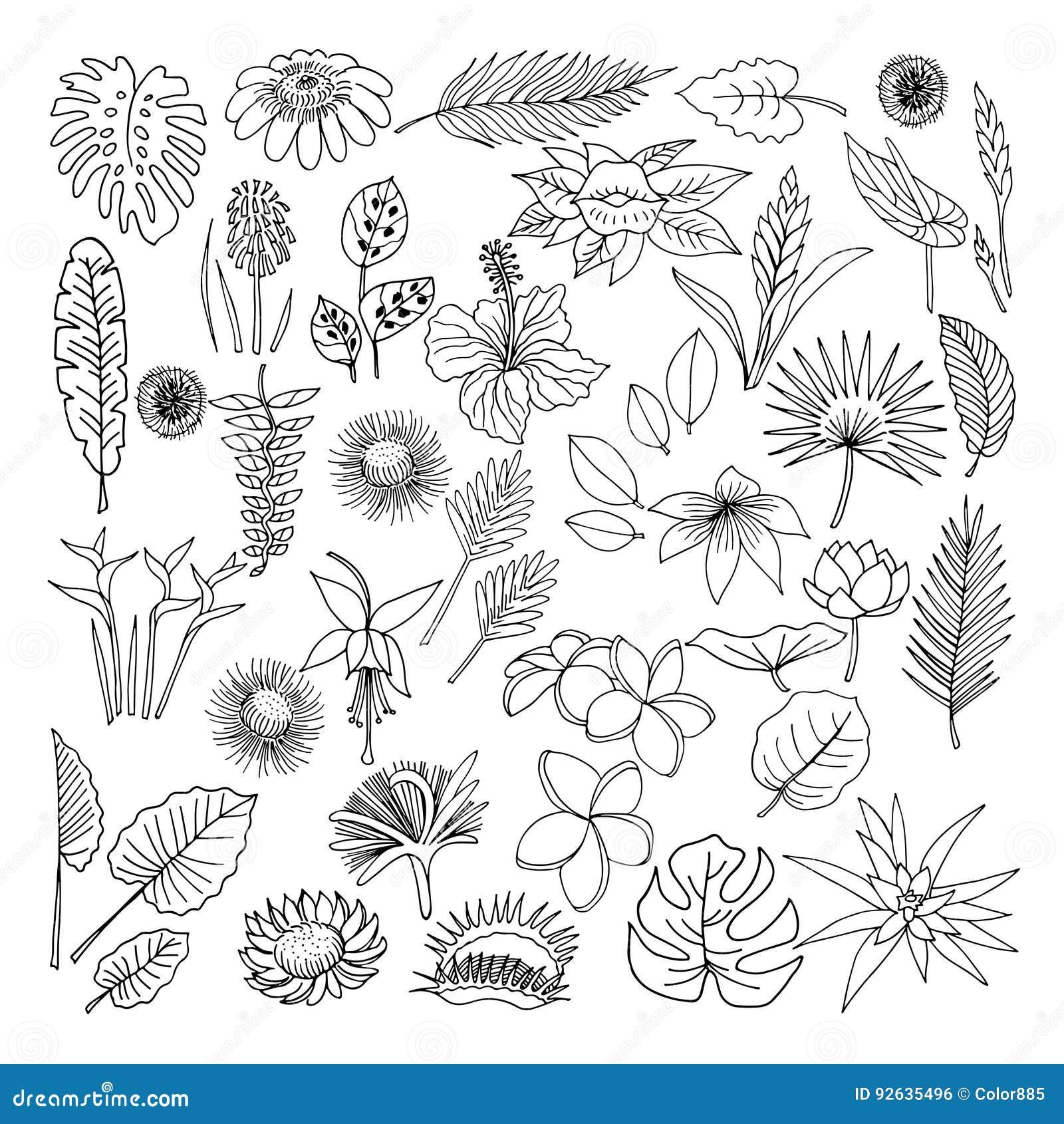Flores Y Hojas De Las Plantas Tropicales Vector Sistema Del