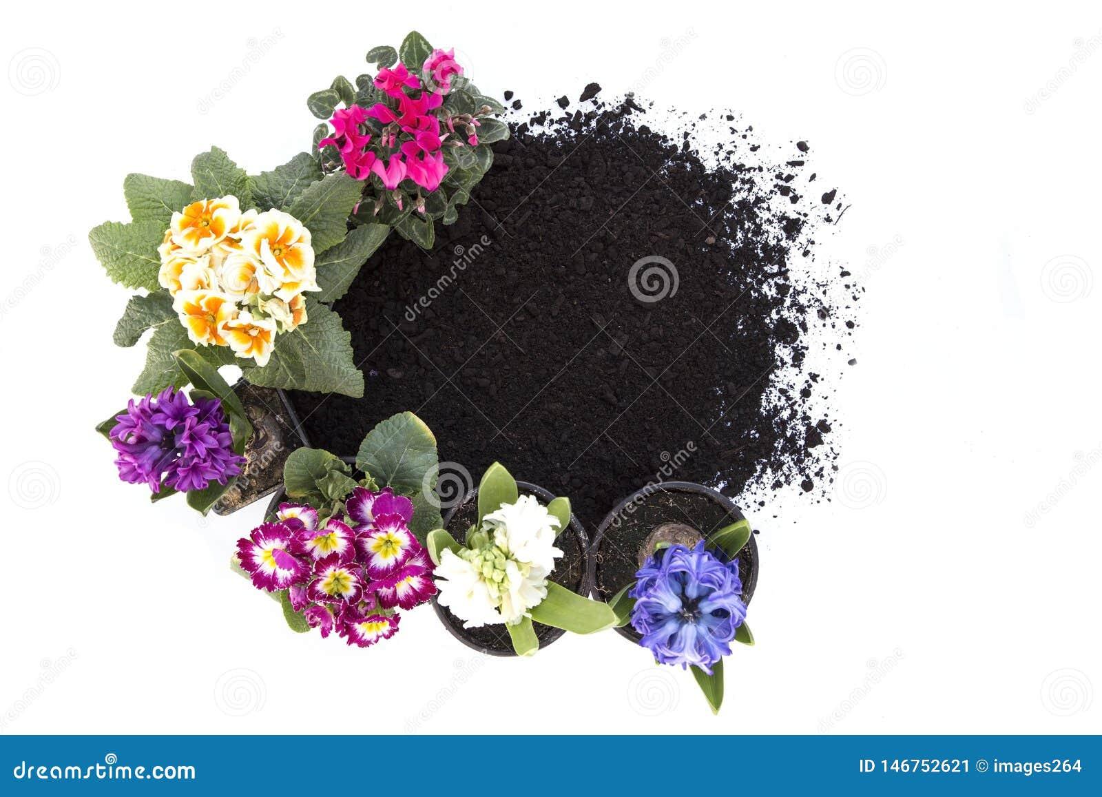 Flores y suelo