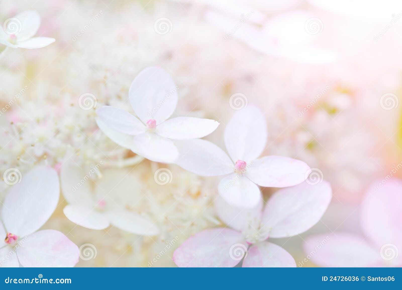 Floresce delicadamente