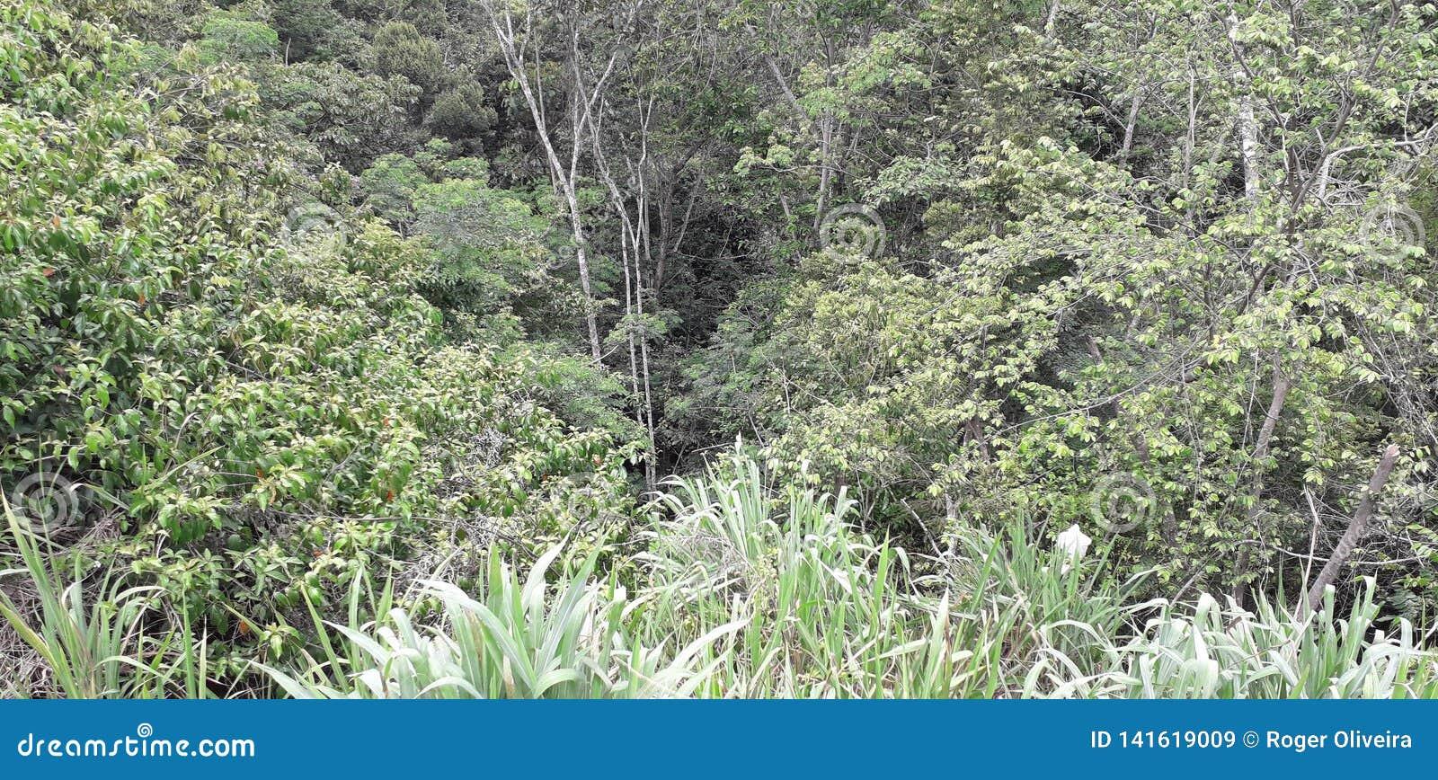 Florest na Aldeias mieście, wnętrze pernambuco, Brazylia