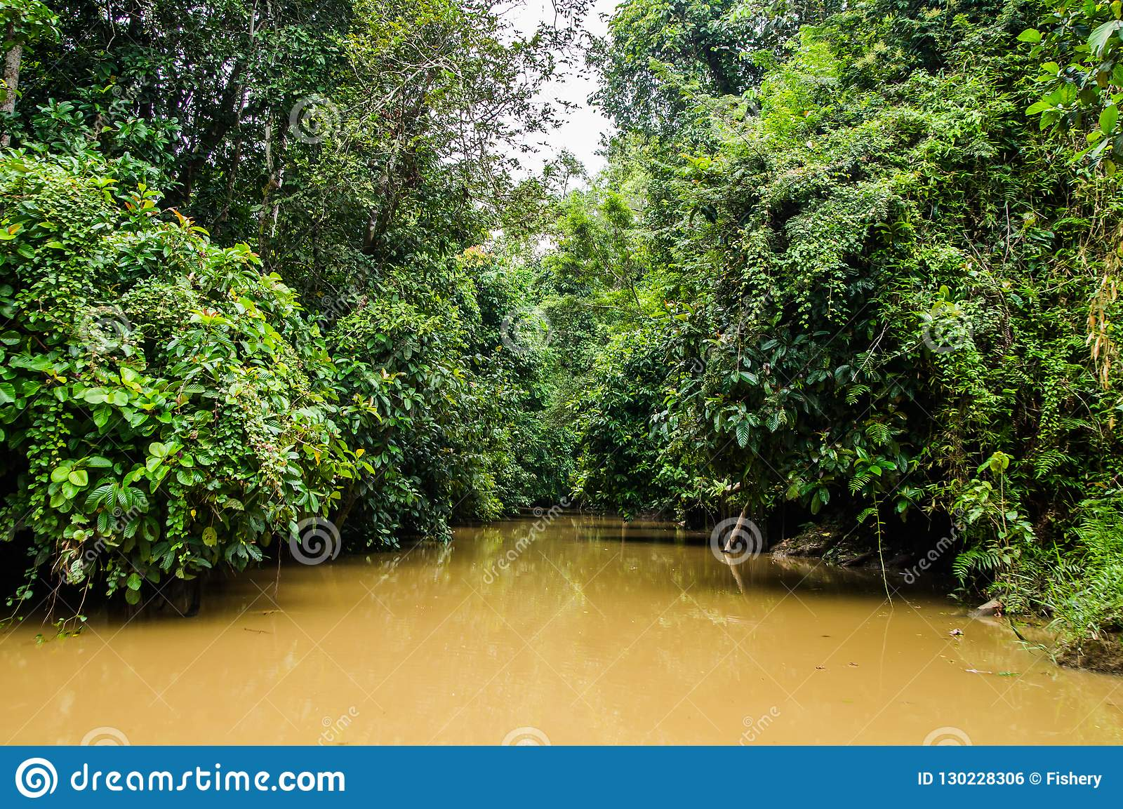 Floresta úmida ao longo do rio kinabatangan, Sabah, Bornéu Malaysi