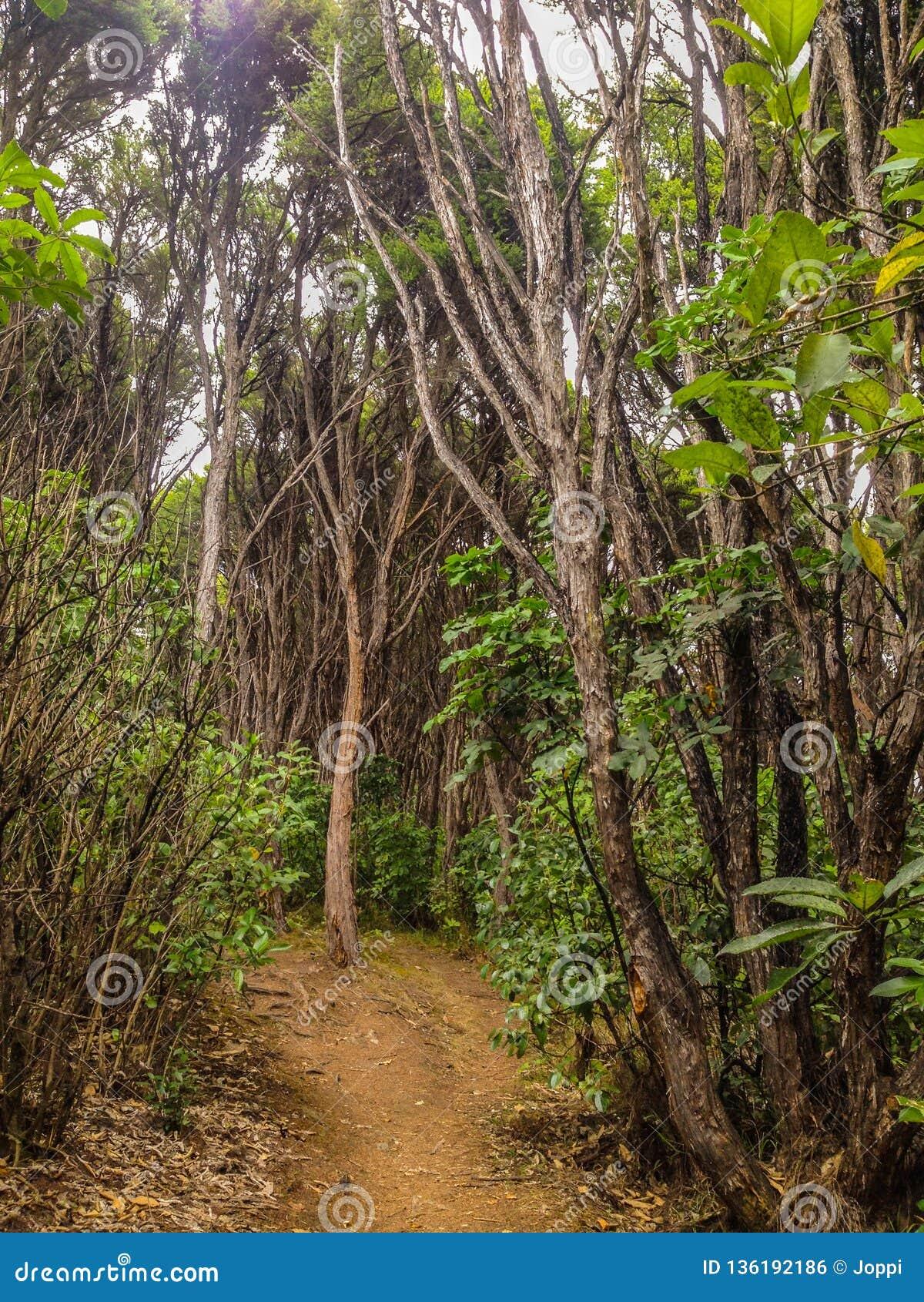 Floresta úmida luxúria perto de Picton, ilha sul, Nova Zelândia
