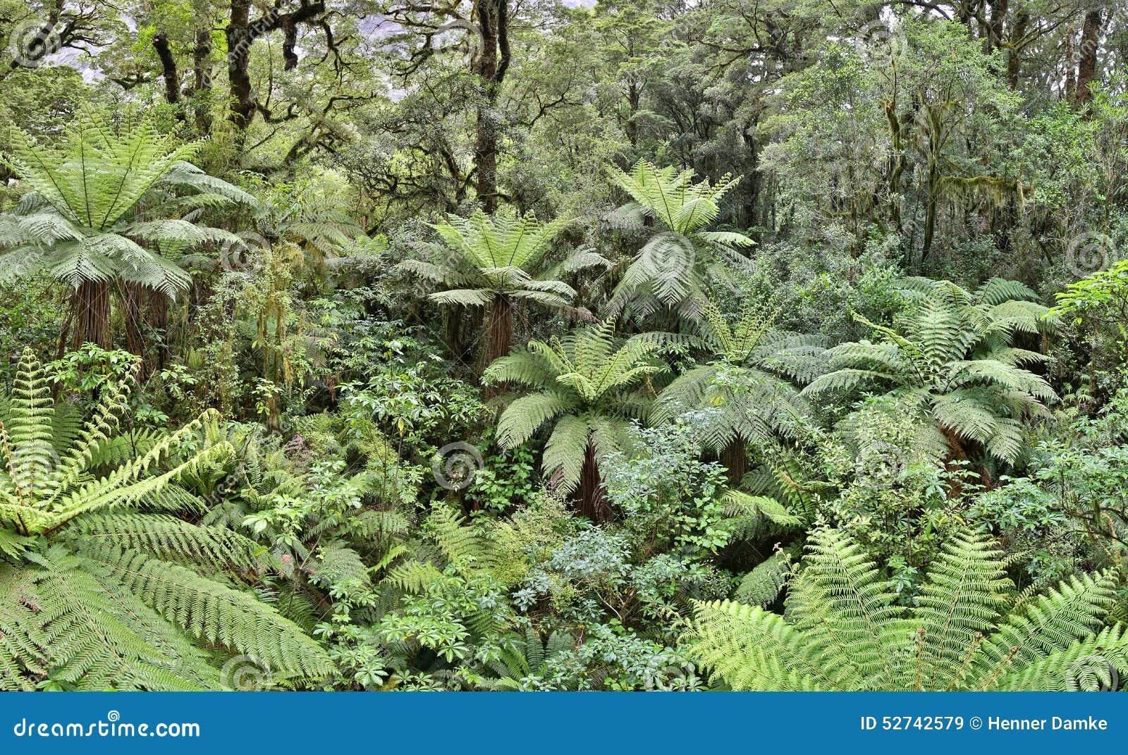 Floresta úmida temperada com árvores da samambaia (Fjordland, Nova Zelândia)