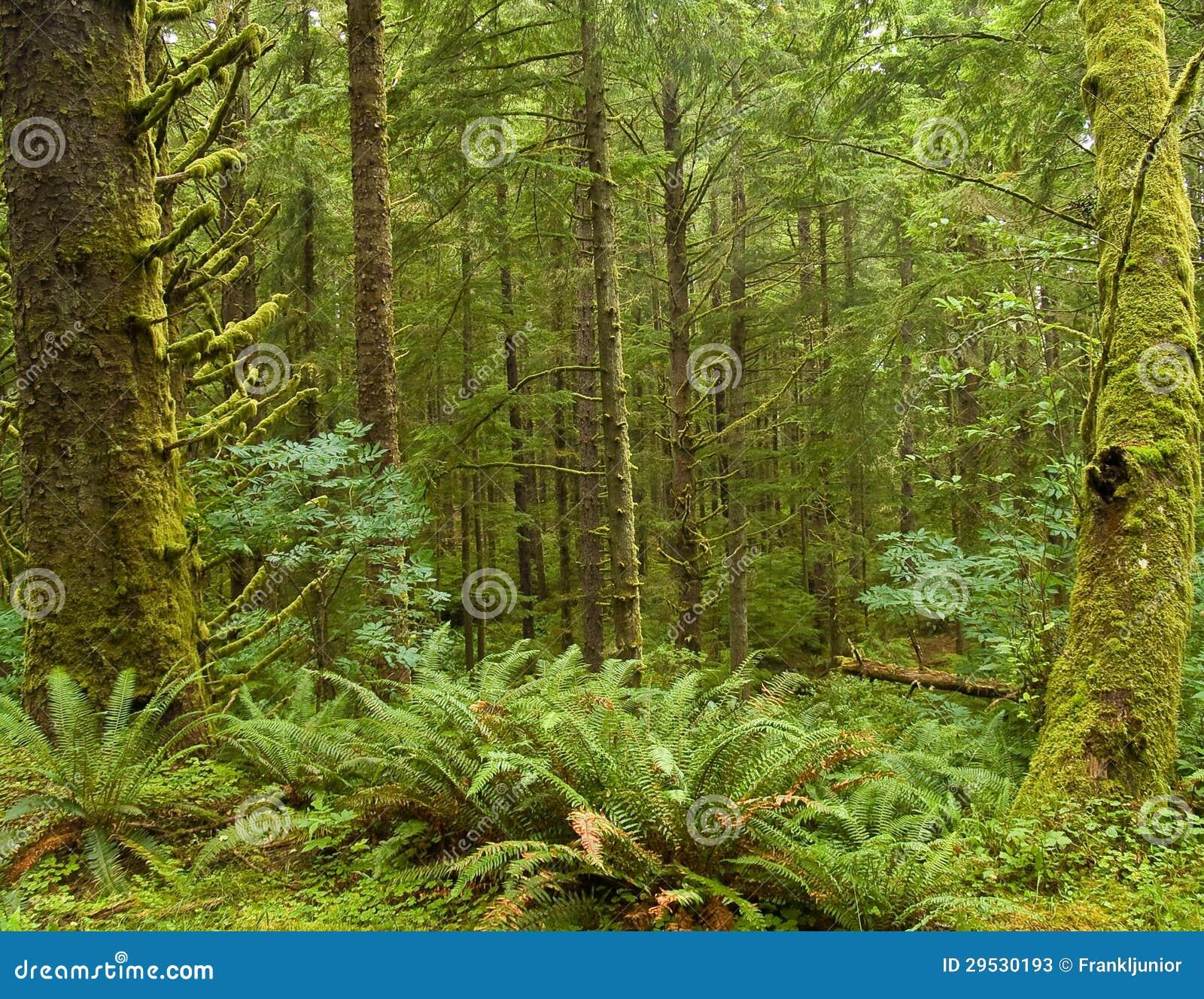 Floresta úmida verde