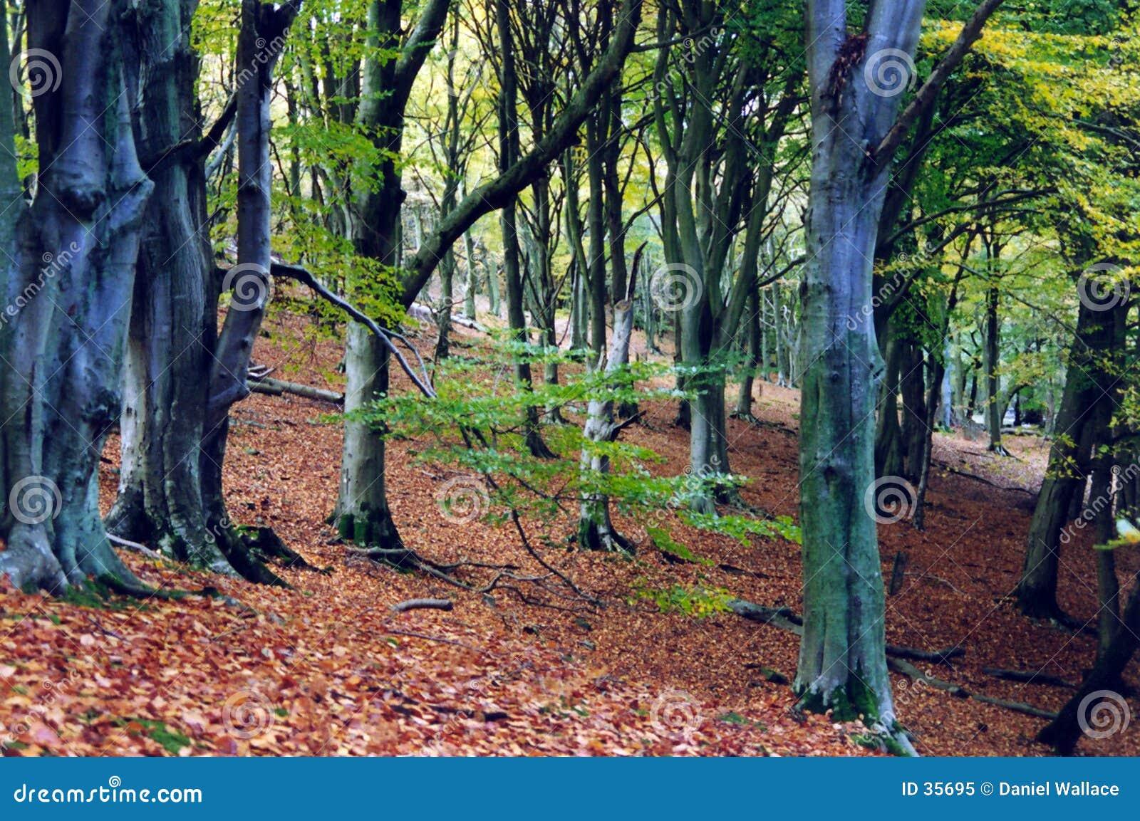 Floresta antiga