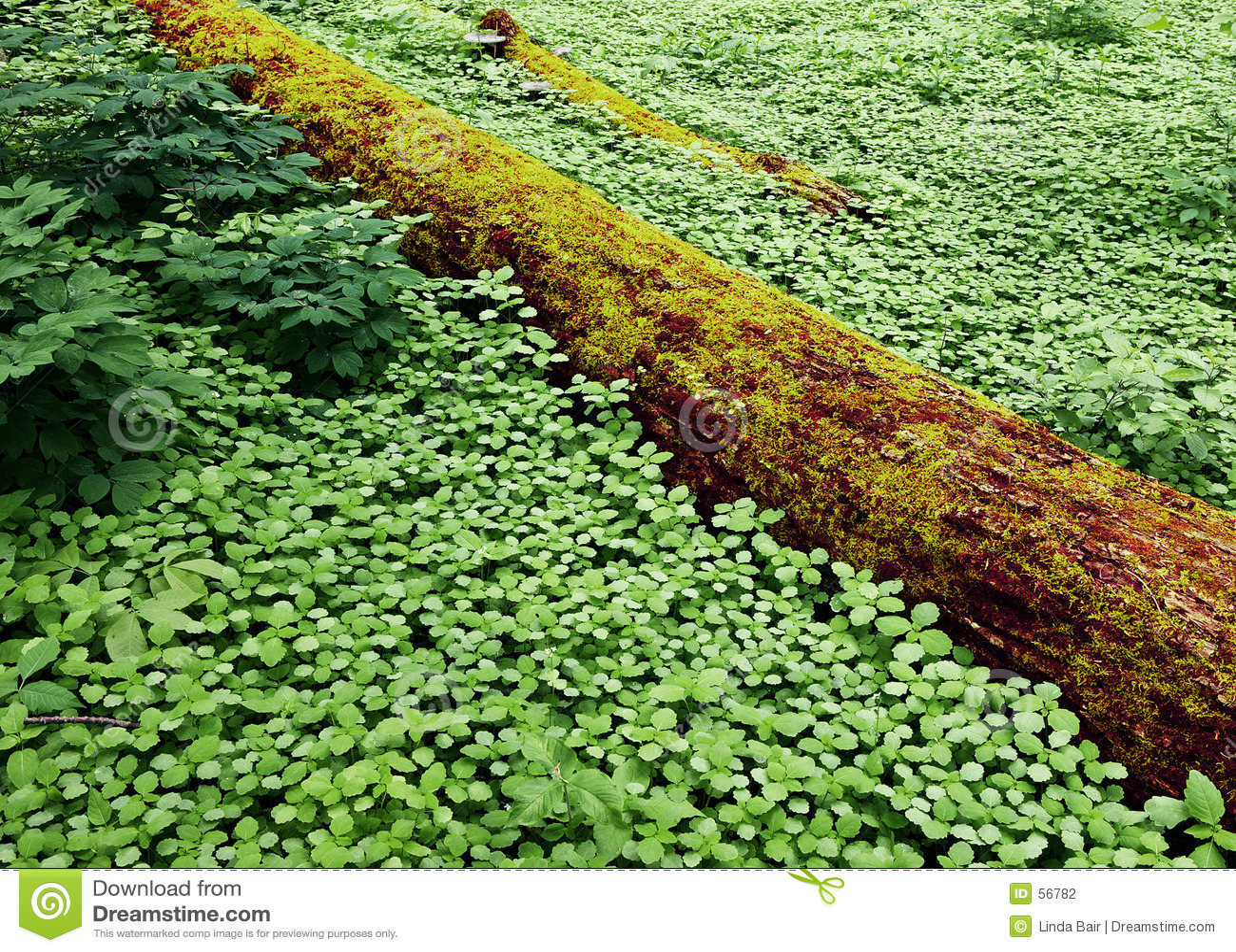 Floresta atapetada