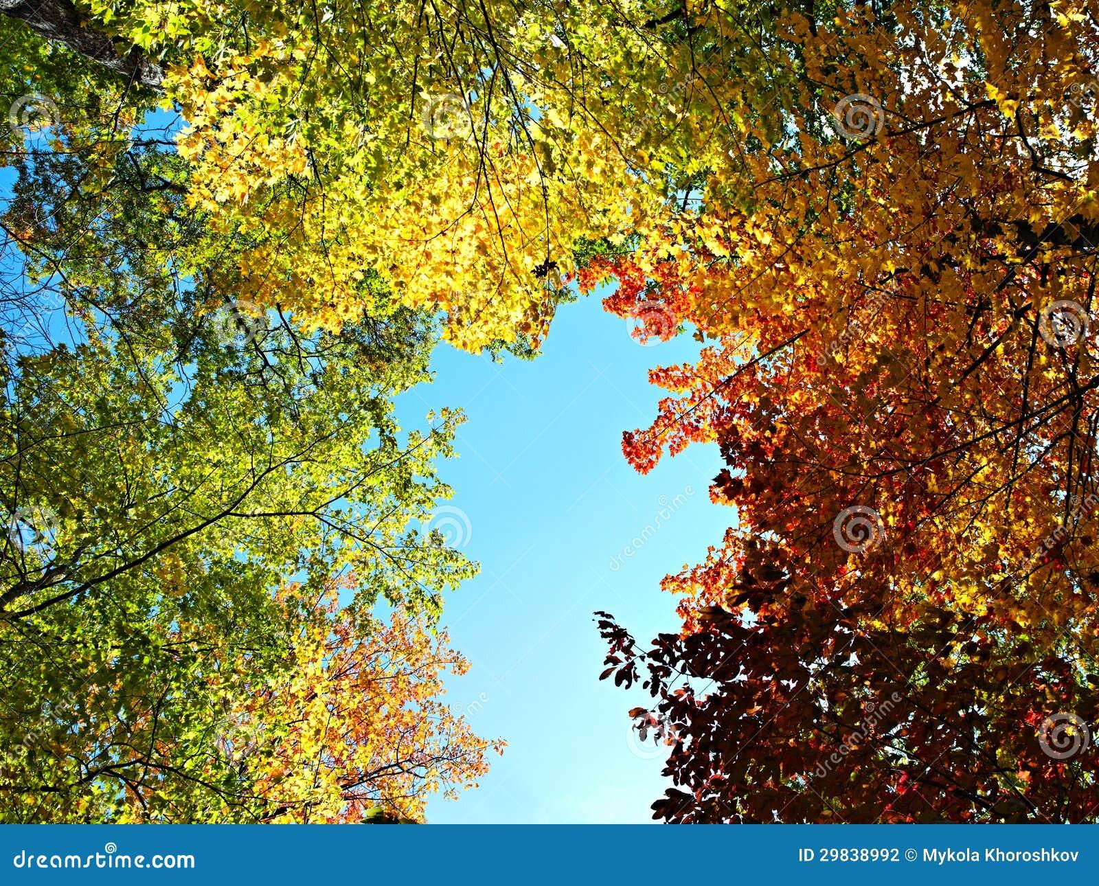 Floresta brilhante do outono