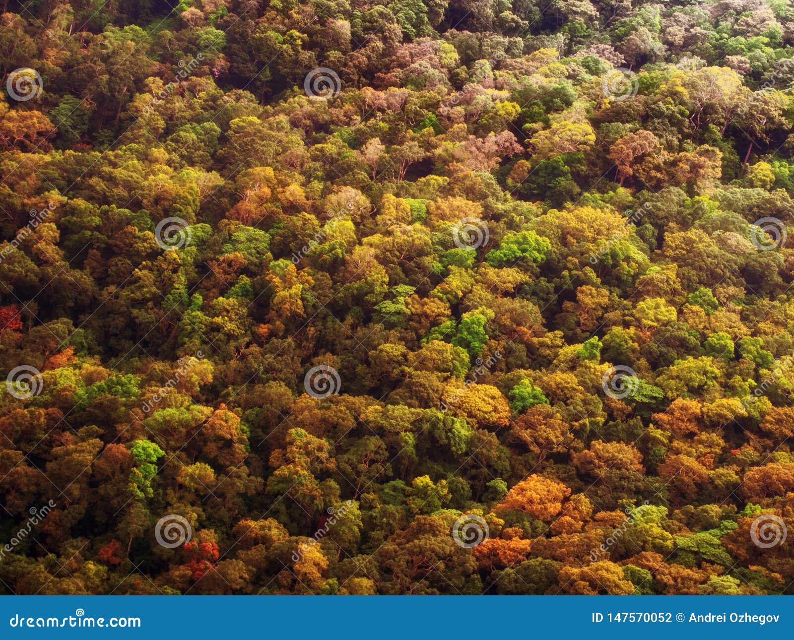 Floresta colorida do outono