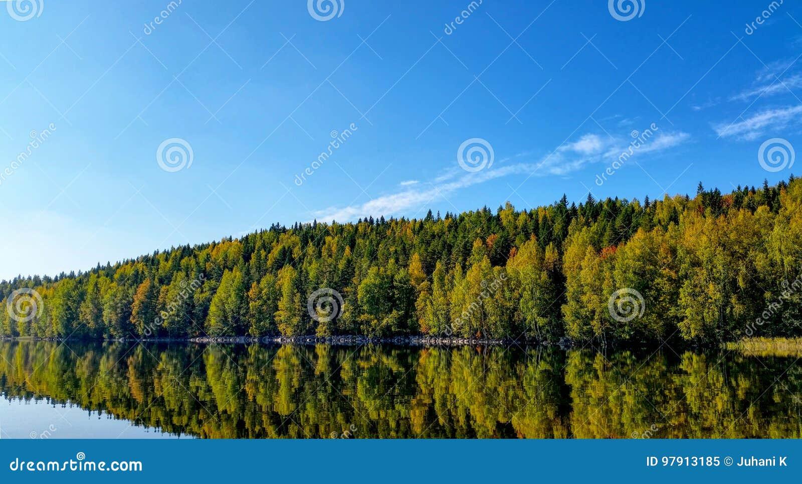 Floresta colorida do outono refletida do lago