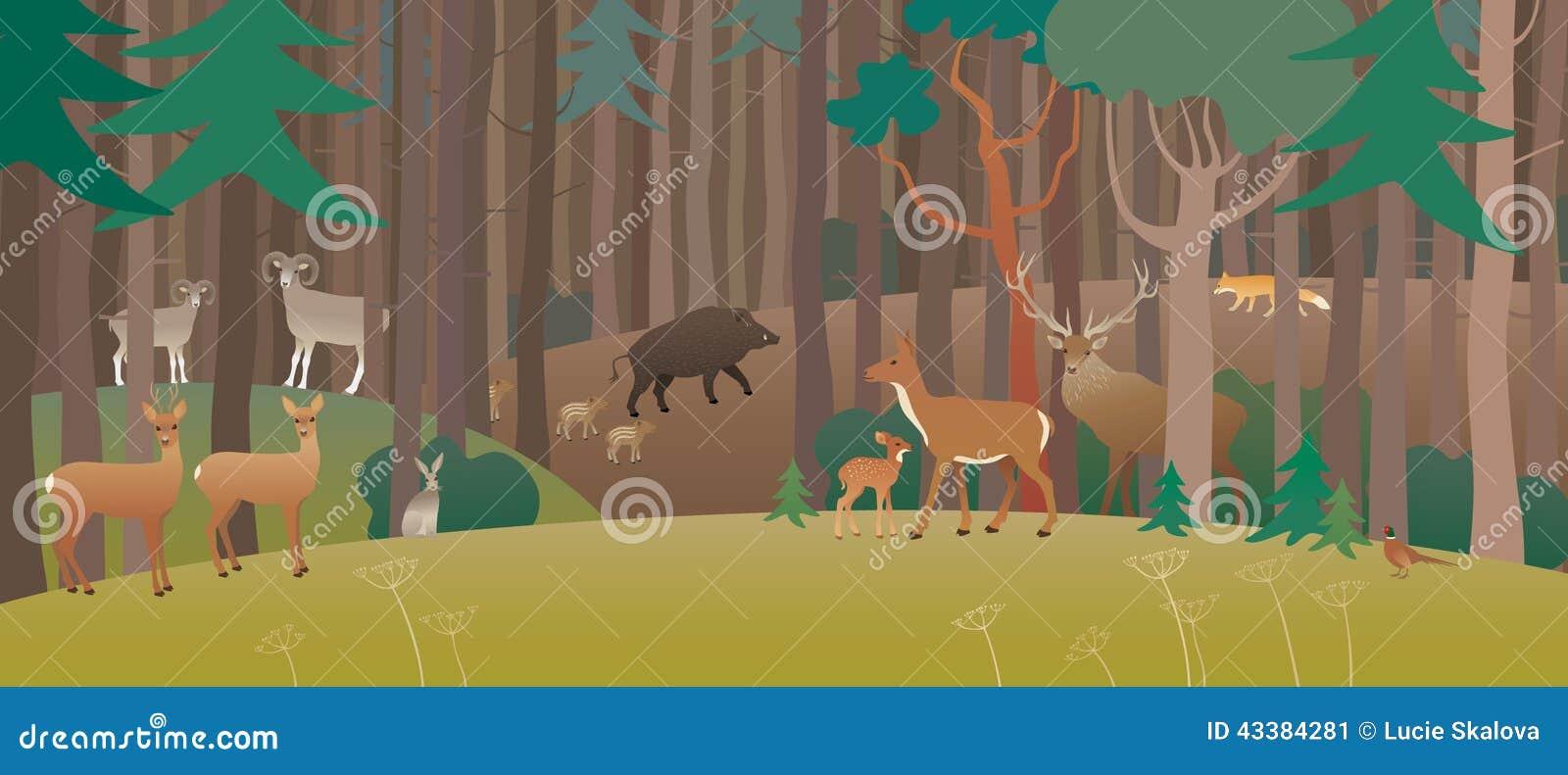 Floresta completamente dos animais