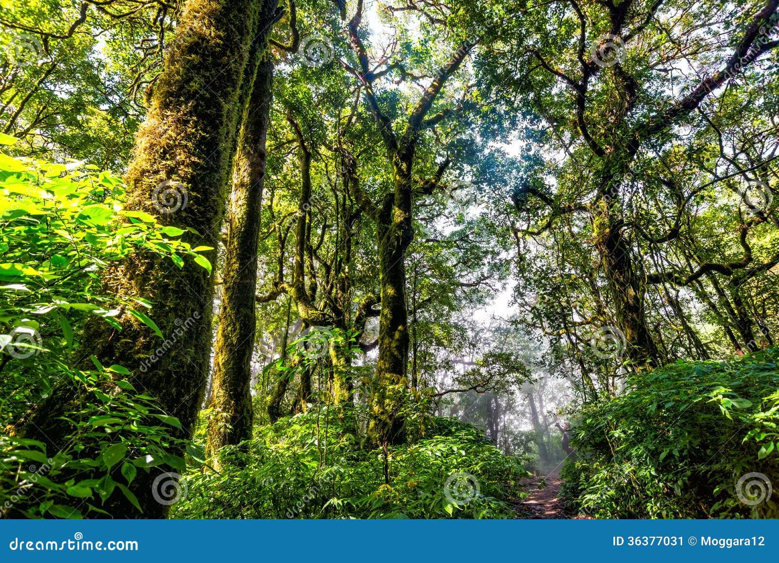 Floresta da árvore na estação do outono de Tailândia