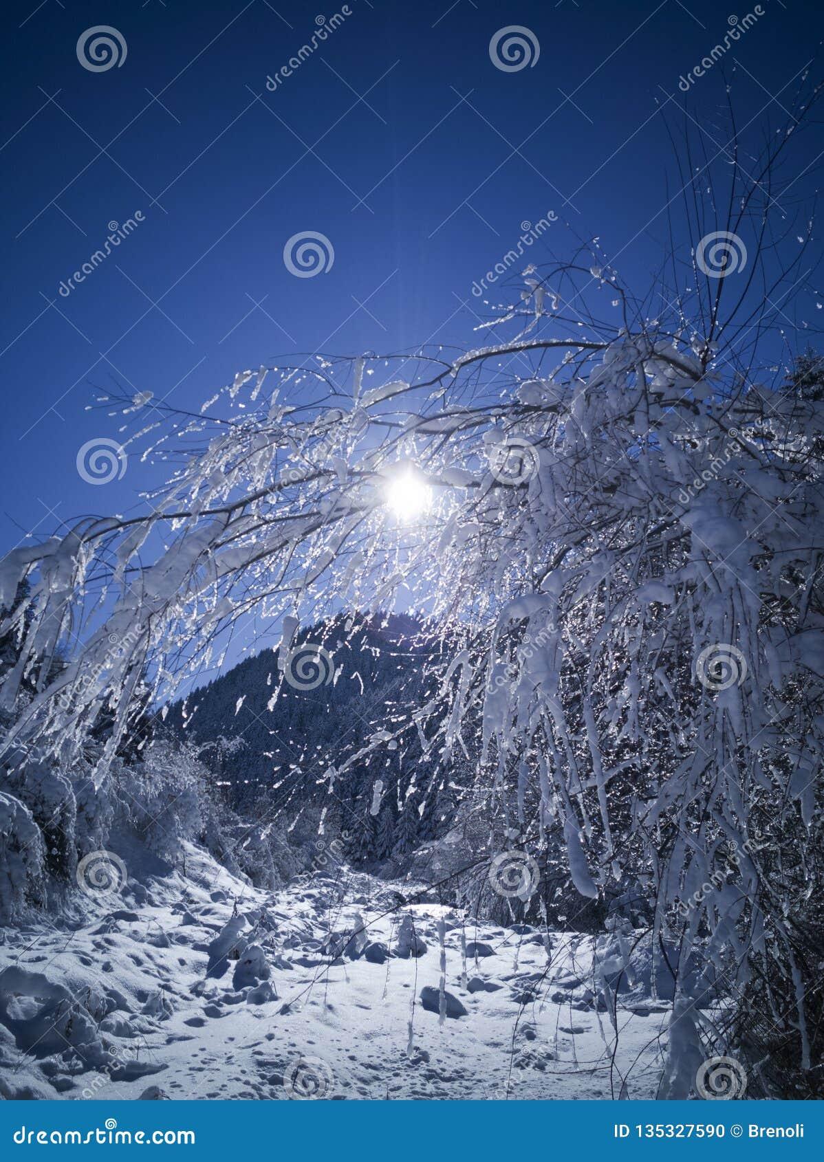 Floresta da montanha no inverno