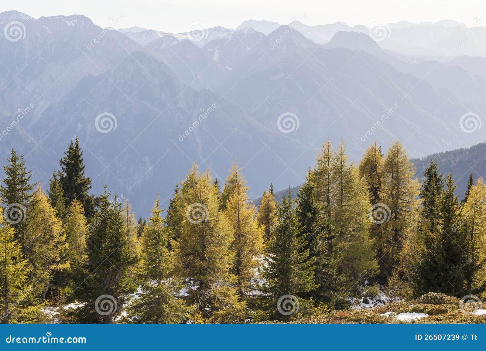 Floresta da montanha no outono