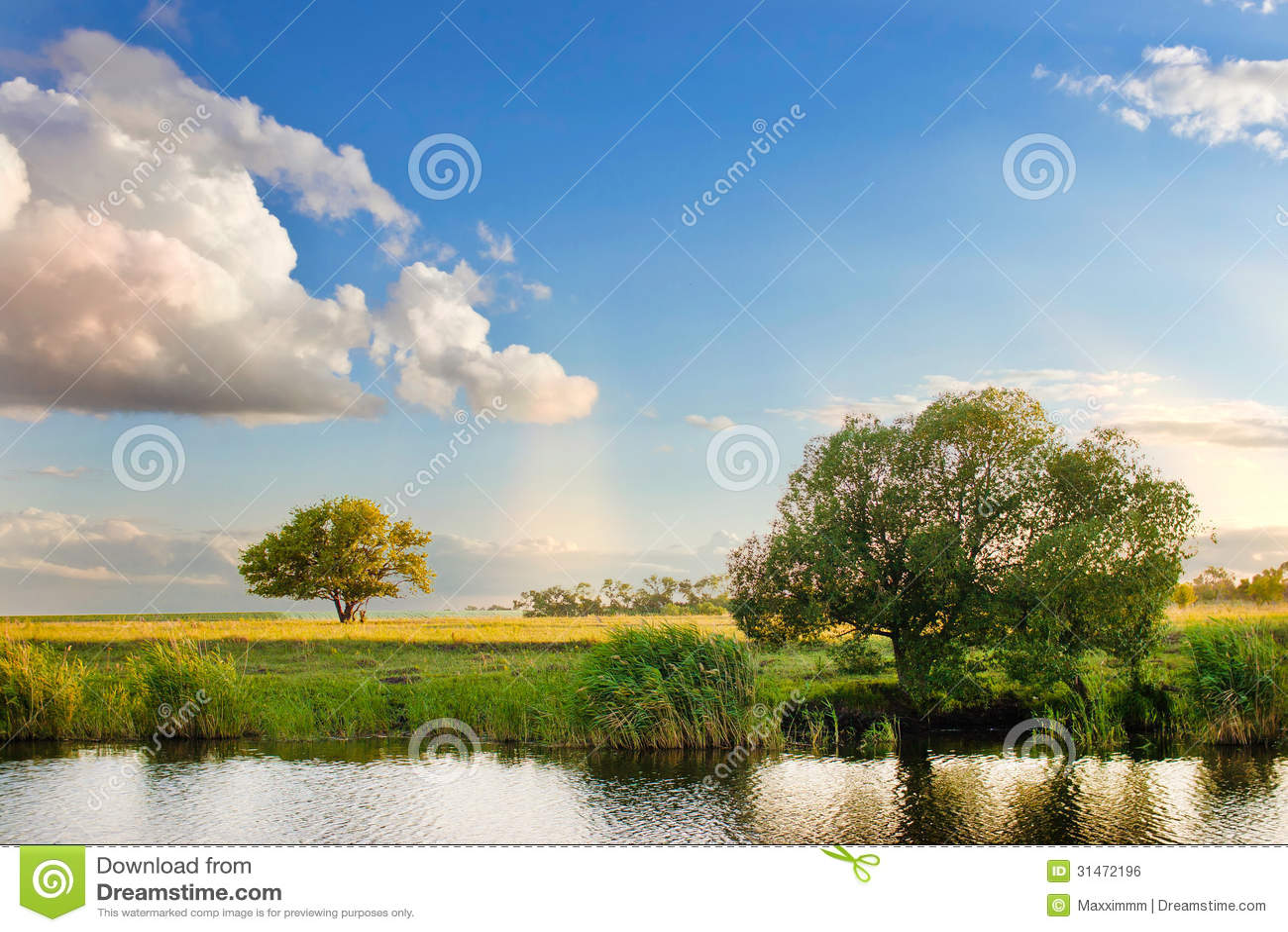 Floresta da natureza da paisagem da árvore do verão do céu do rio