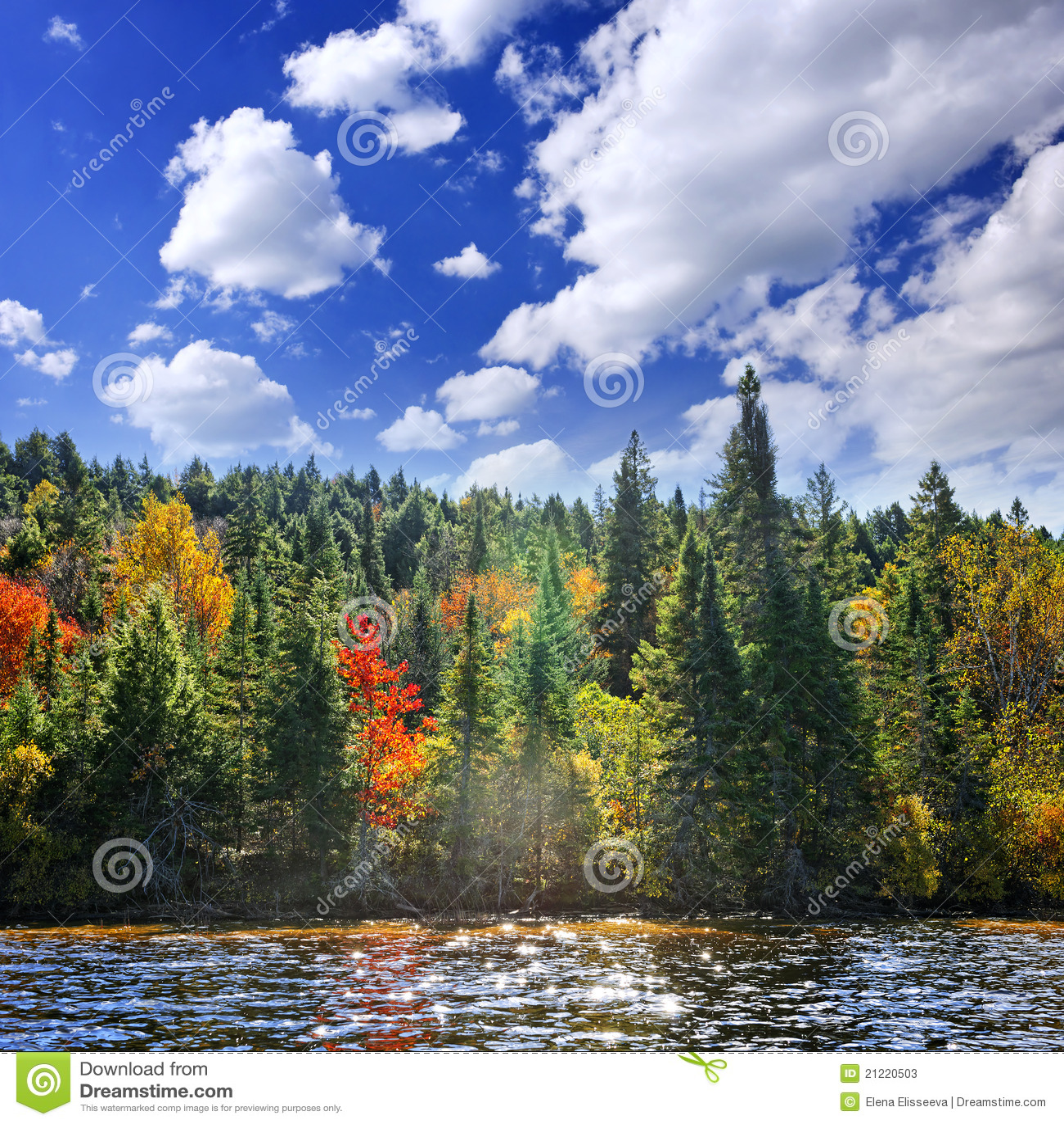 Floresta da queda na luz do sol