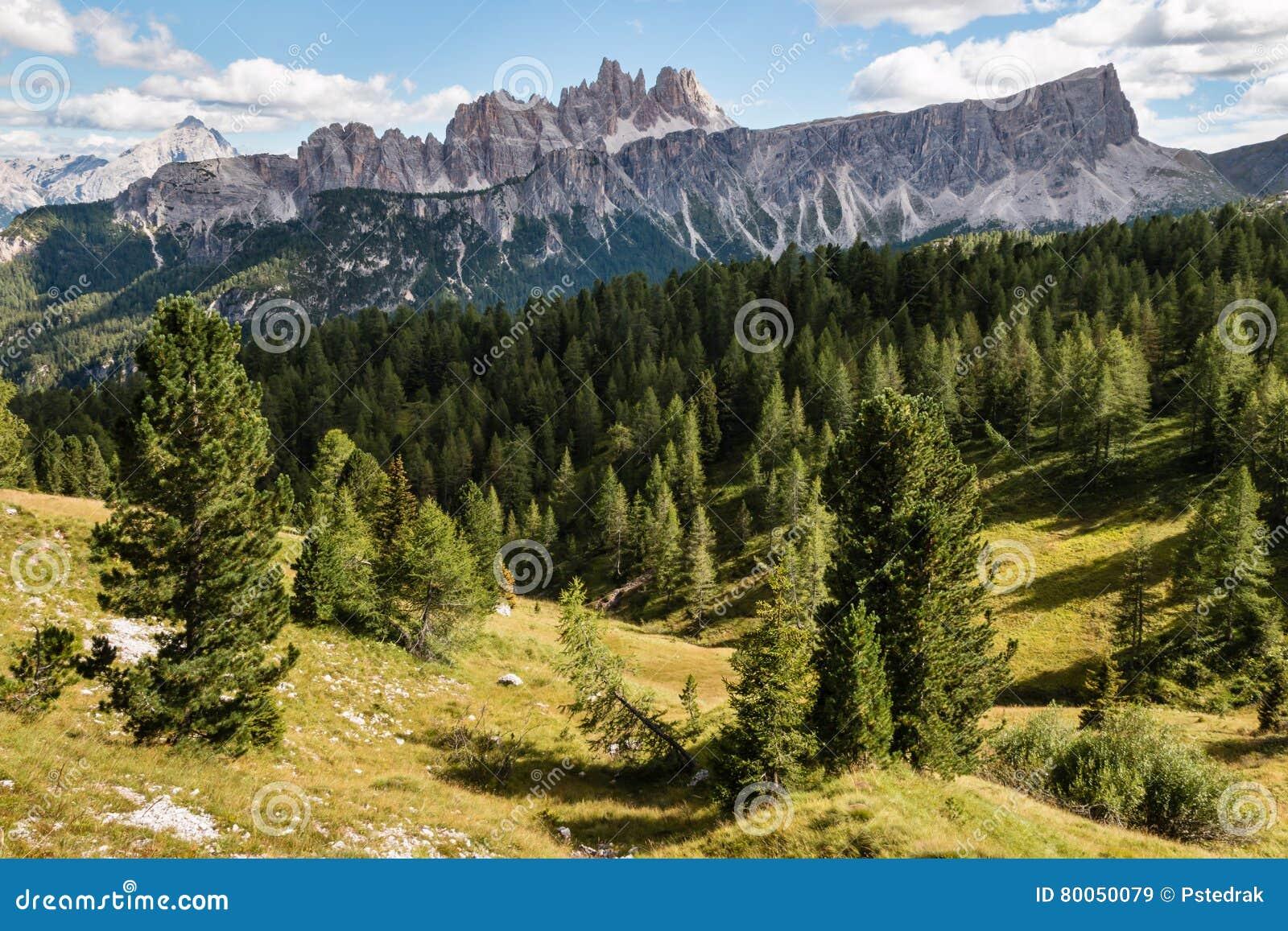 Floresta das coníferas no maciço de Croda a Dinamarca Lago em dolomites sul de Tirol
