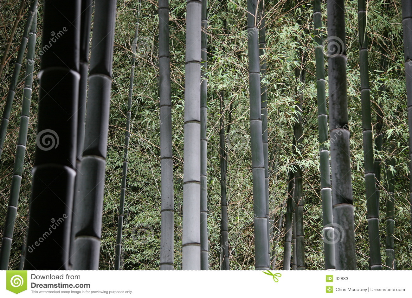 Floresta de bambu na noite