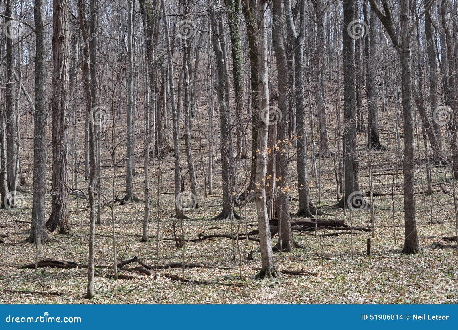 Floresta de folhosa central do Estados Unidos