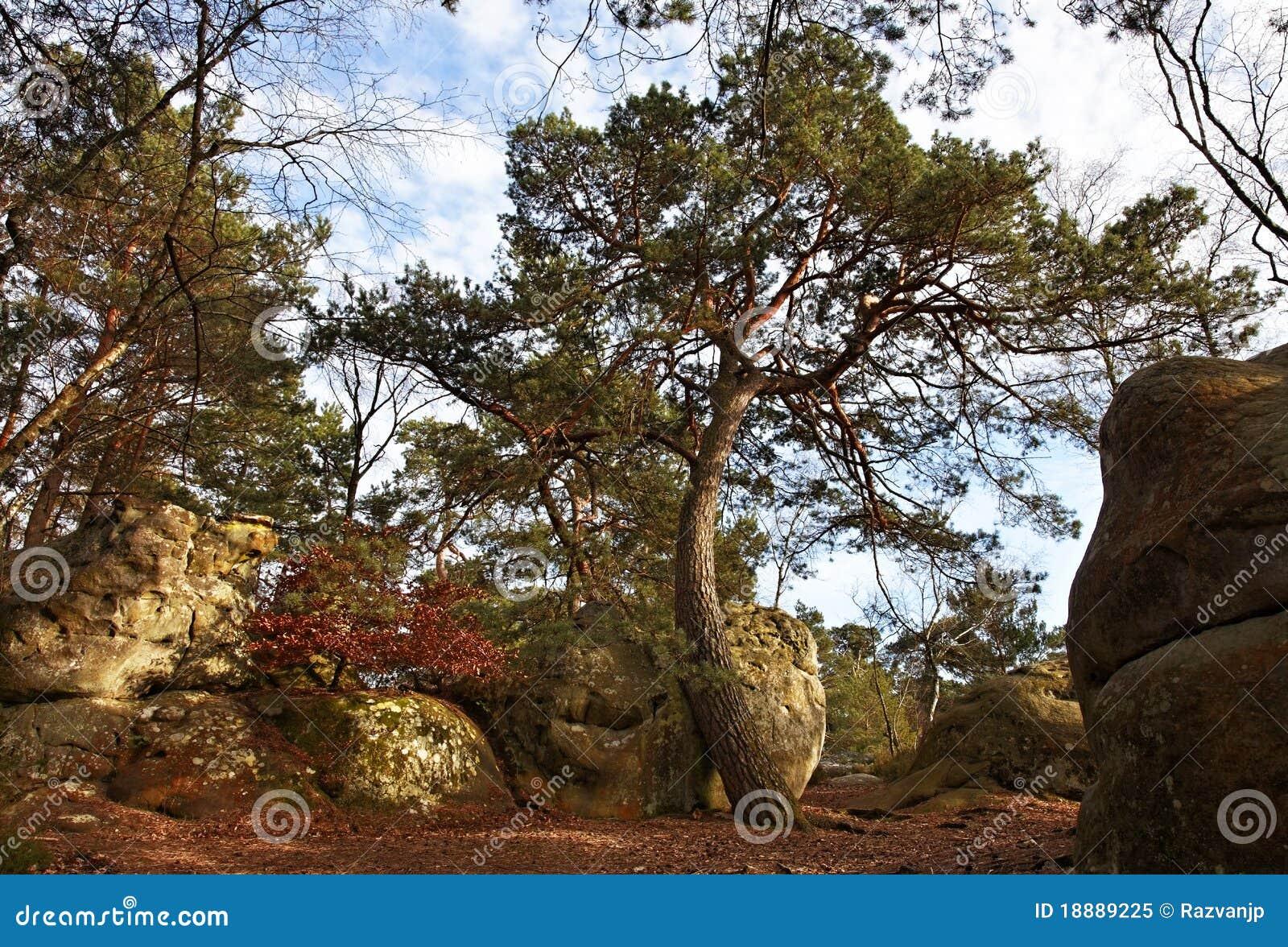 A floresta de Fontainebleau