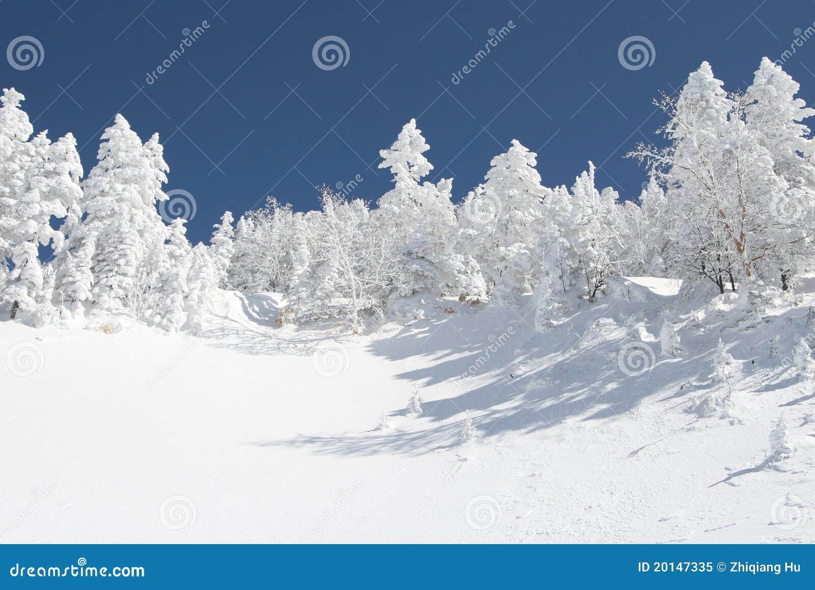Floresta do inverno