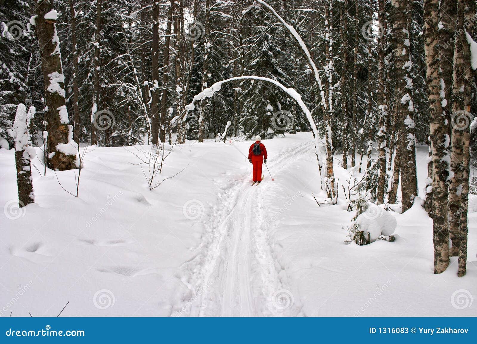 Floresta do inverno. Esquiador vermelho
