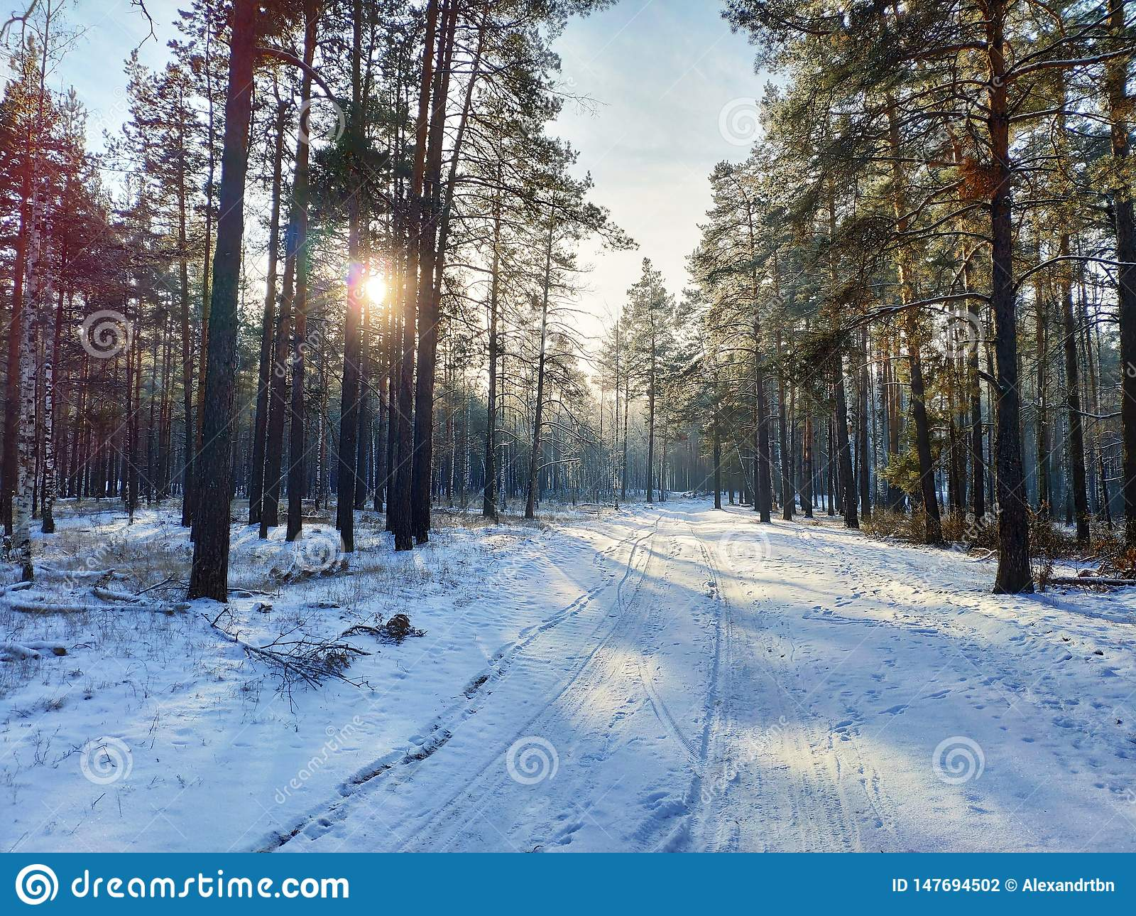 Floresta do inverno no por do sol