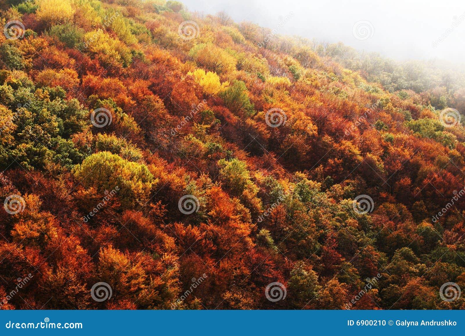 Floresta do outono