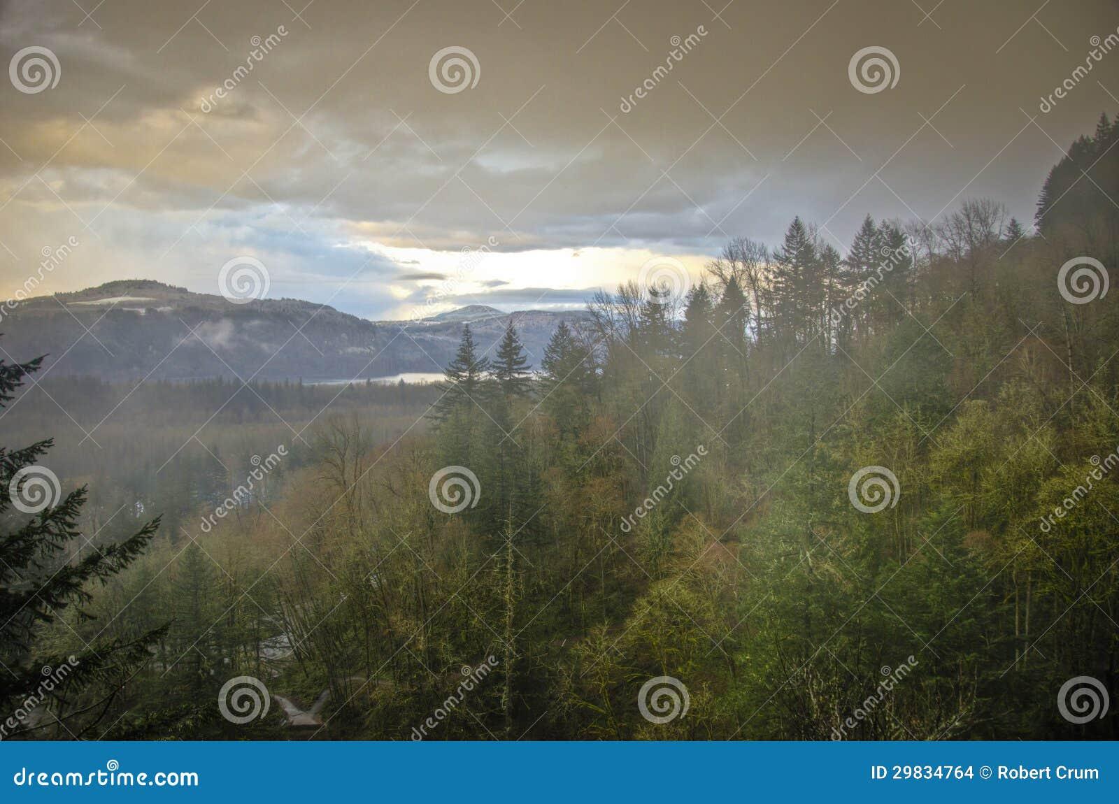 Floresta do outono, desfiladeiro do Rio Columbia, Oregon