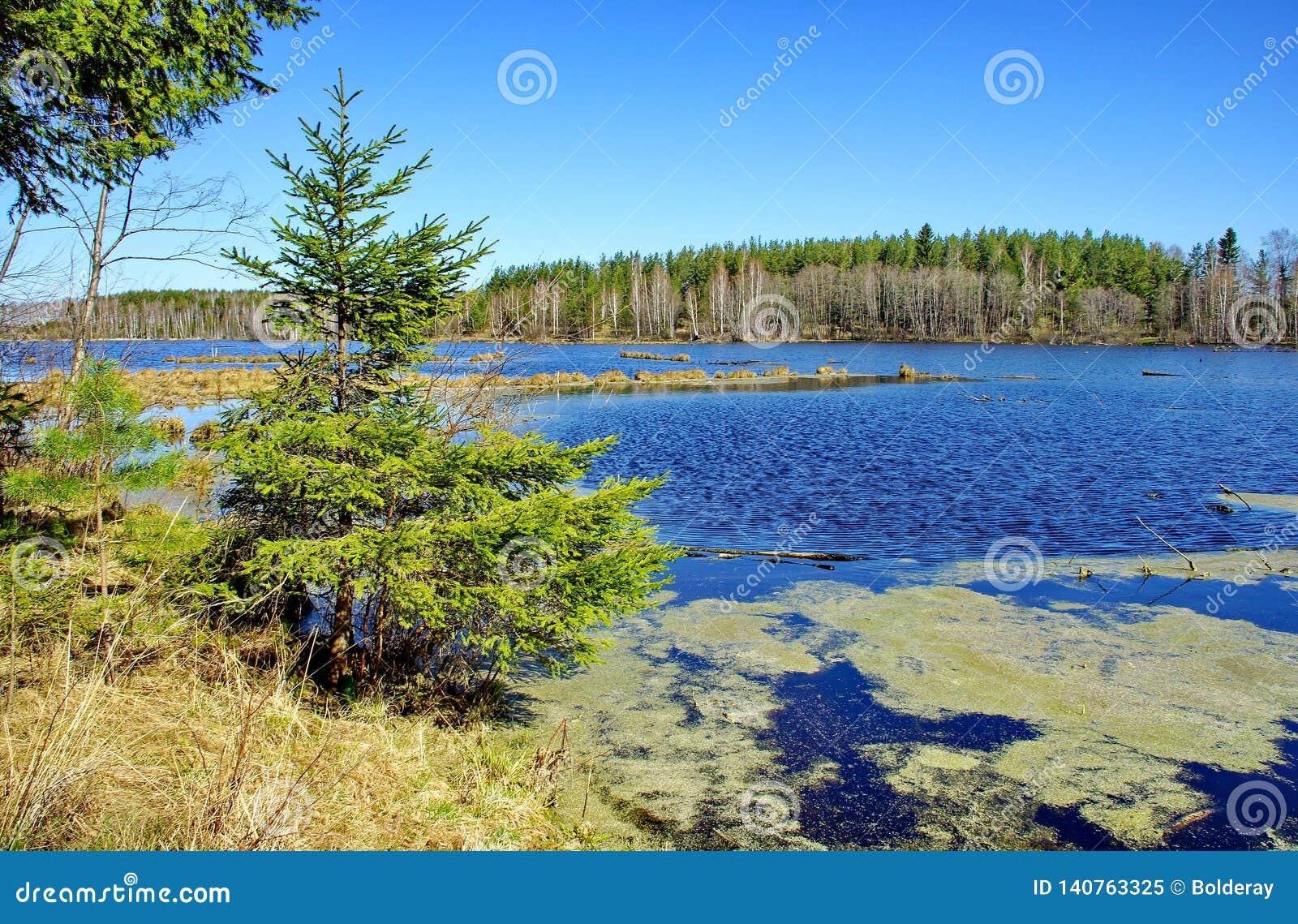 A floresta do outono refletiu em um lago da floresta Outono dourado Reflexão do céu na água Os últimos dias mornos do outono