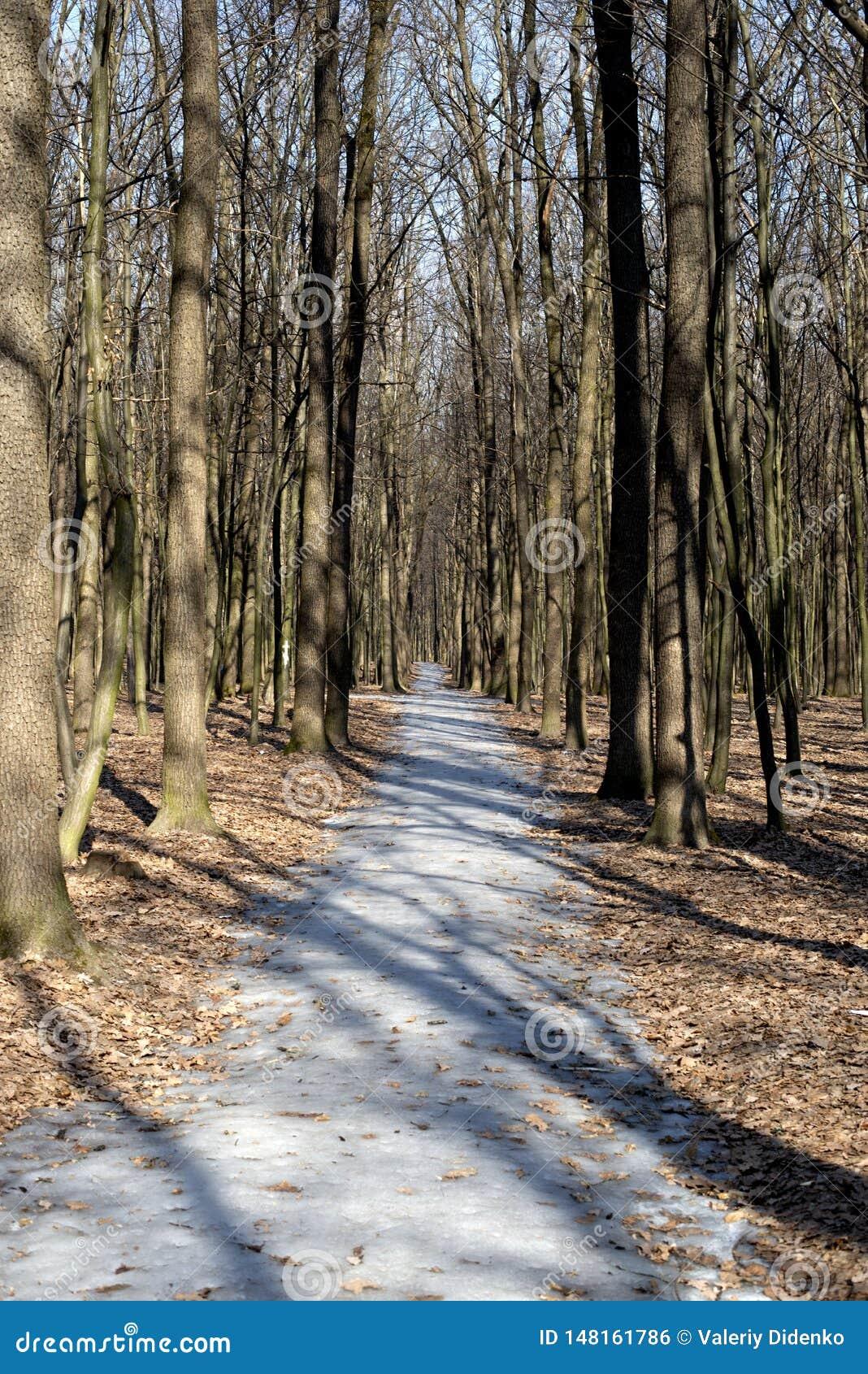 Floresta do passeio na primavera