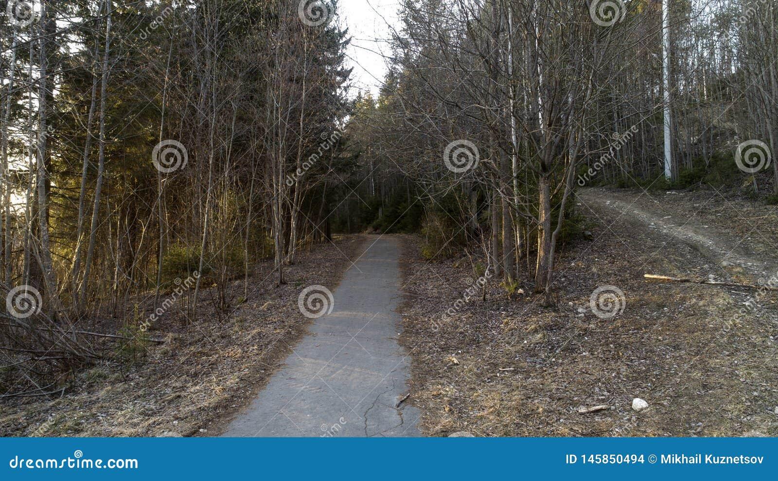 Floresta do pinho no início da mola Floresta após a paisagem do inverno