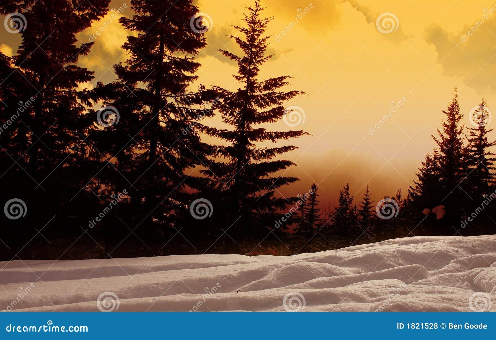 Floresta do por do sol