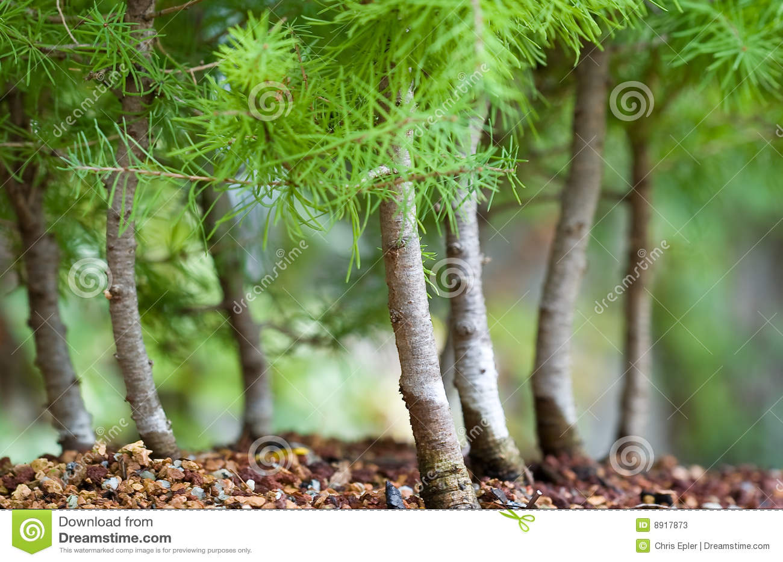 Floresta dos bonsais