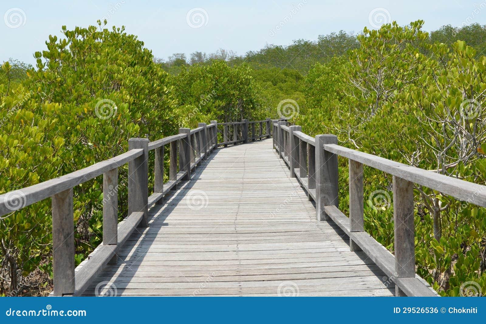 A floresta dos manguezais em Ásia