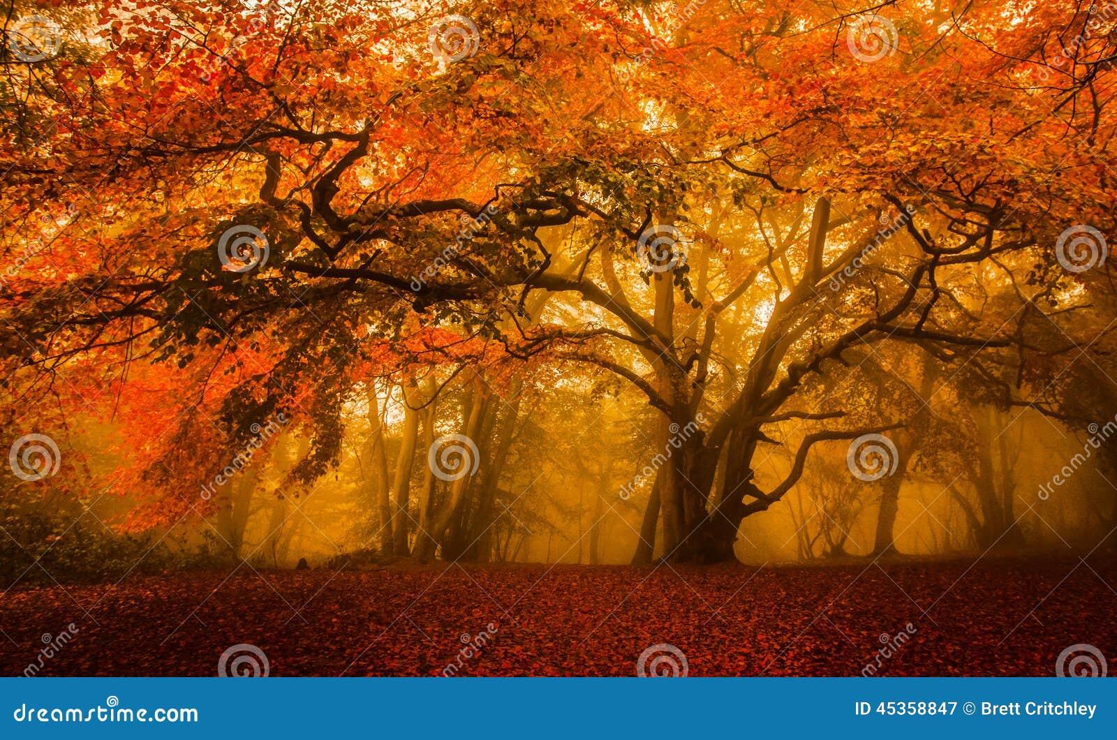 Floresta dourada do outono