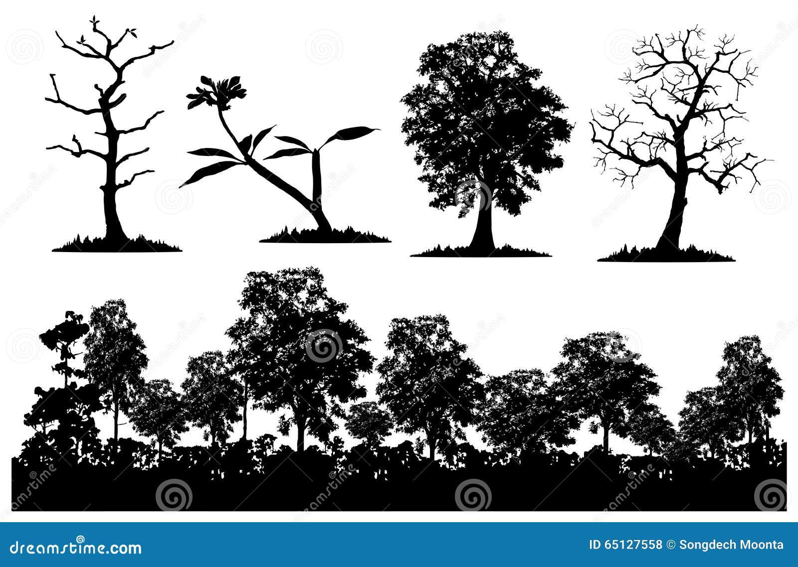 Floresta e árvore