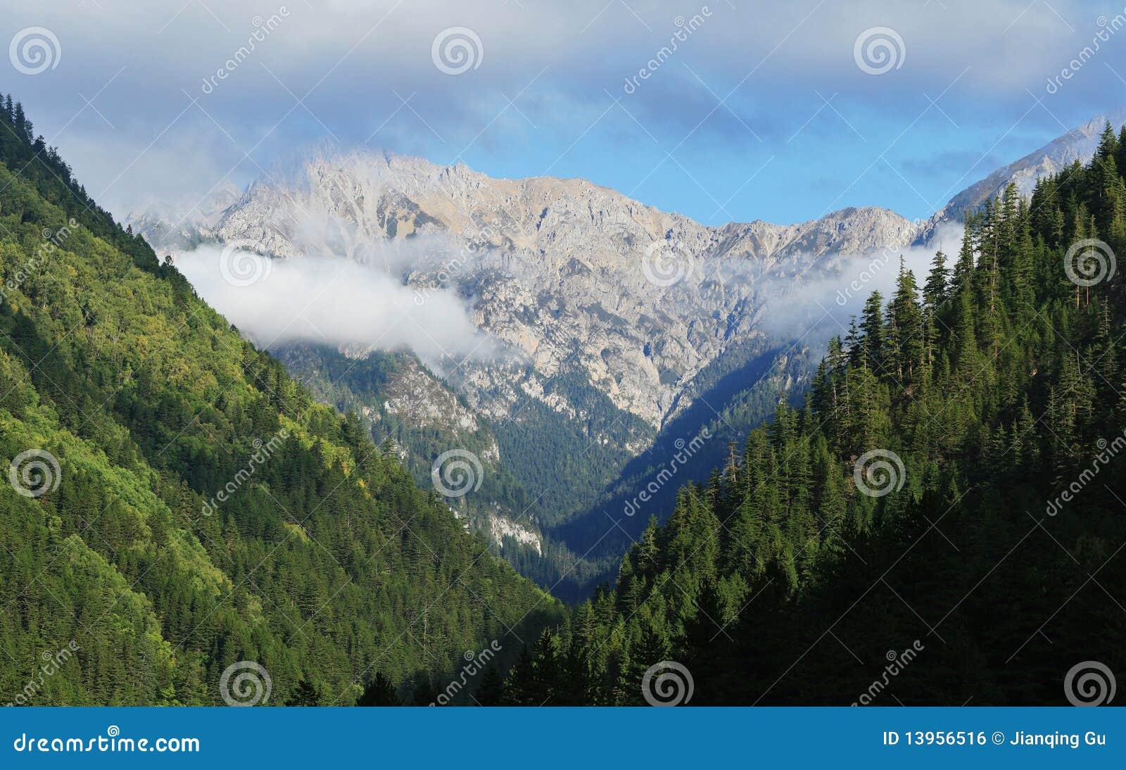 Floresta e montanha
