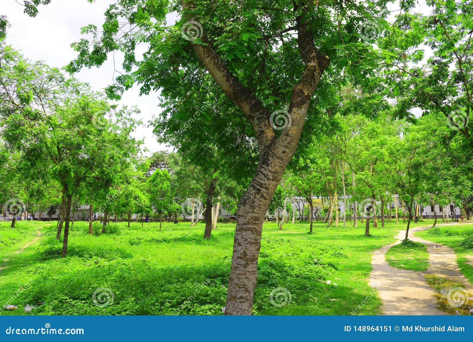 Floresta e ?rvore verde da selva Cen?rio natural bonito Selvas tropicais profundas Autumn Landscape Fundo da queda Luz solar da f