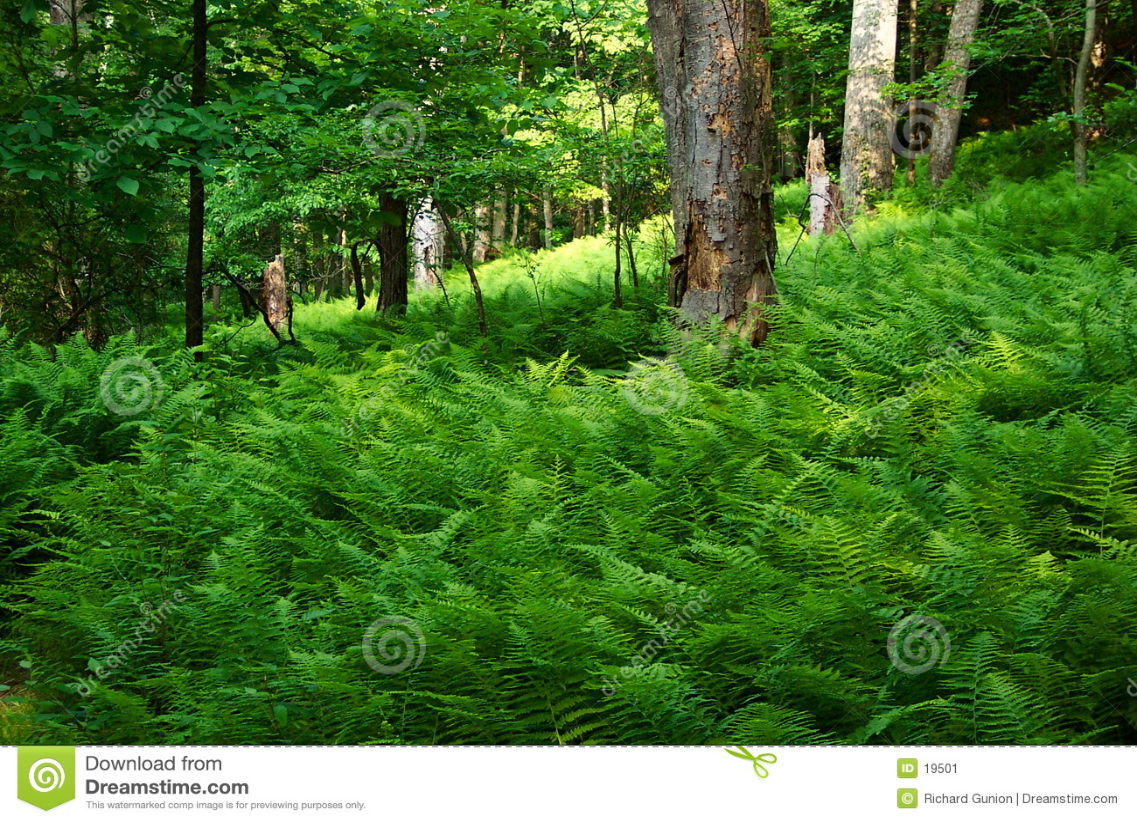 Floresta Enchanted