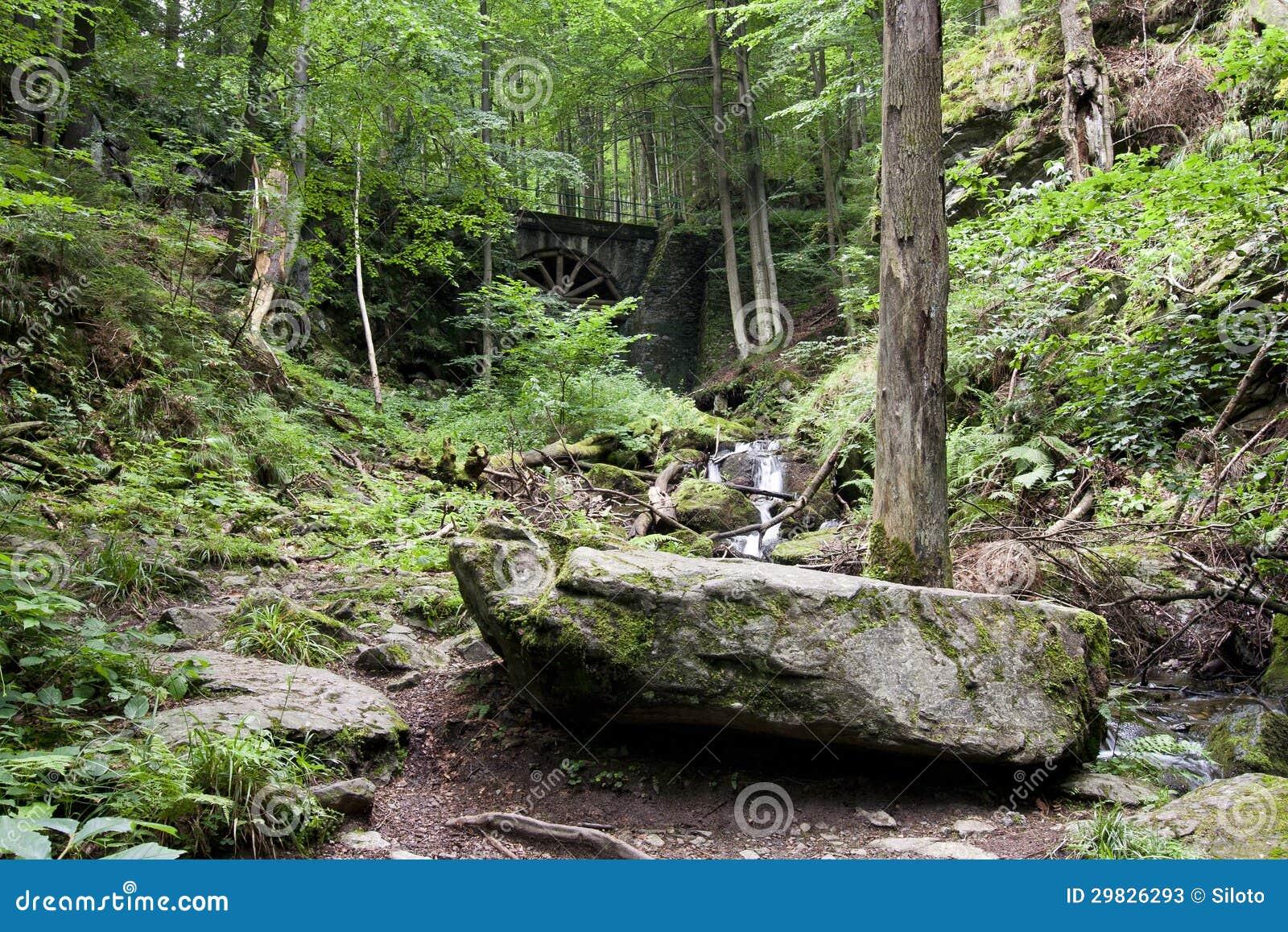 Floresta Deciduous com ravinas