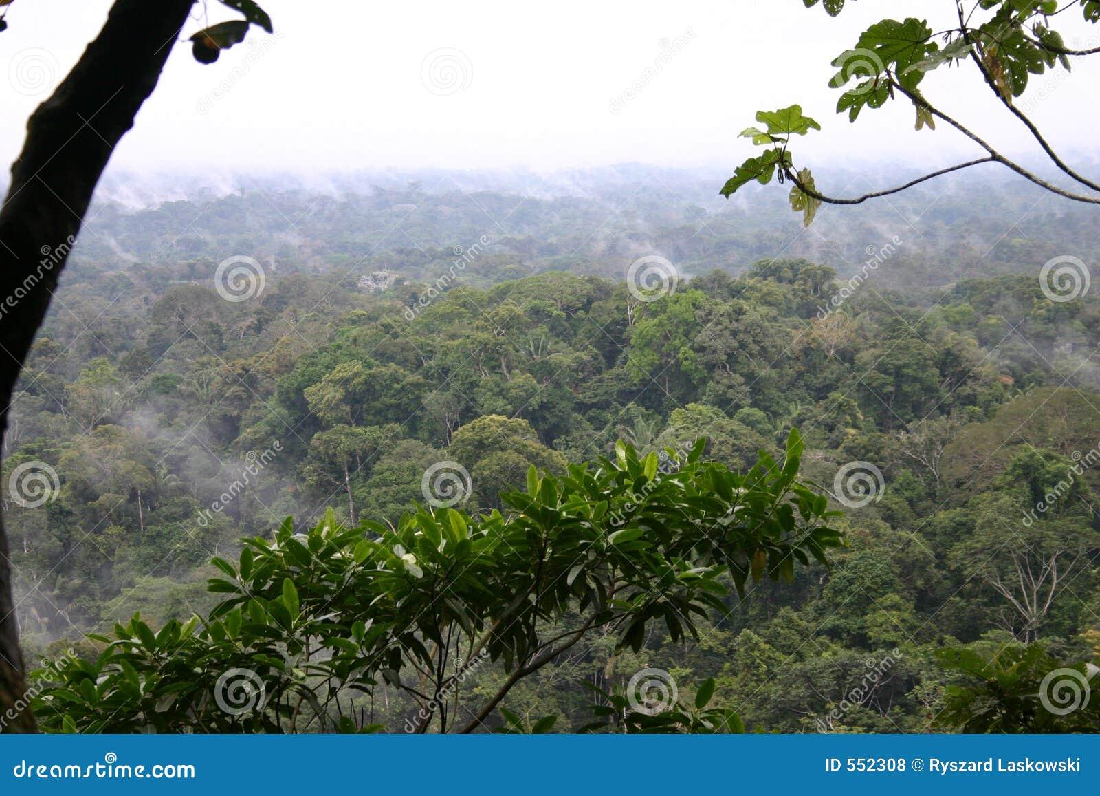 Floresta húmida tropical
