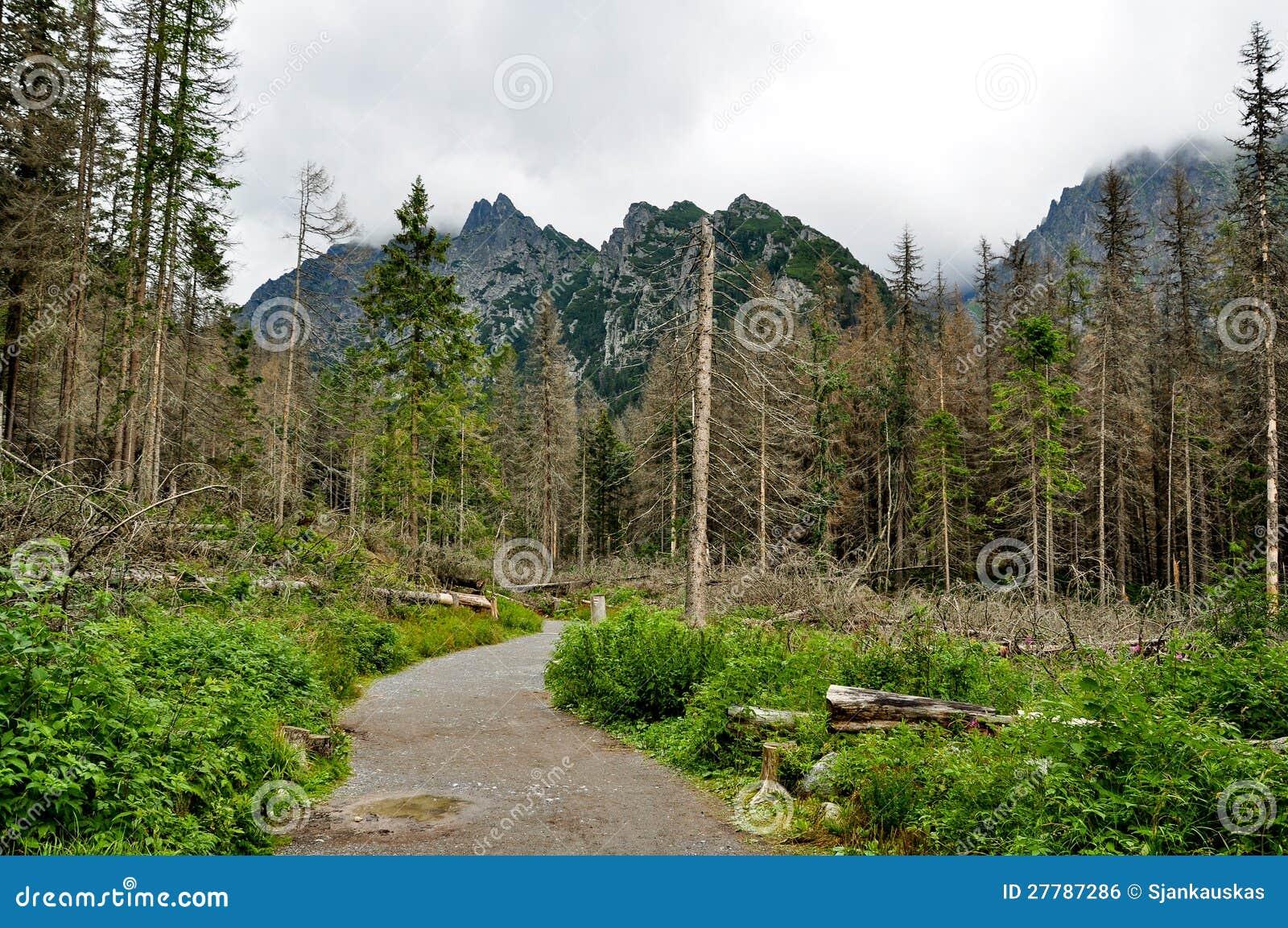 Floresta inoperante